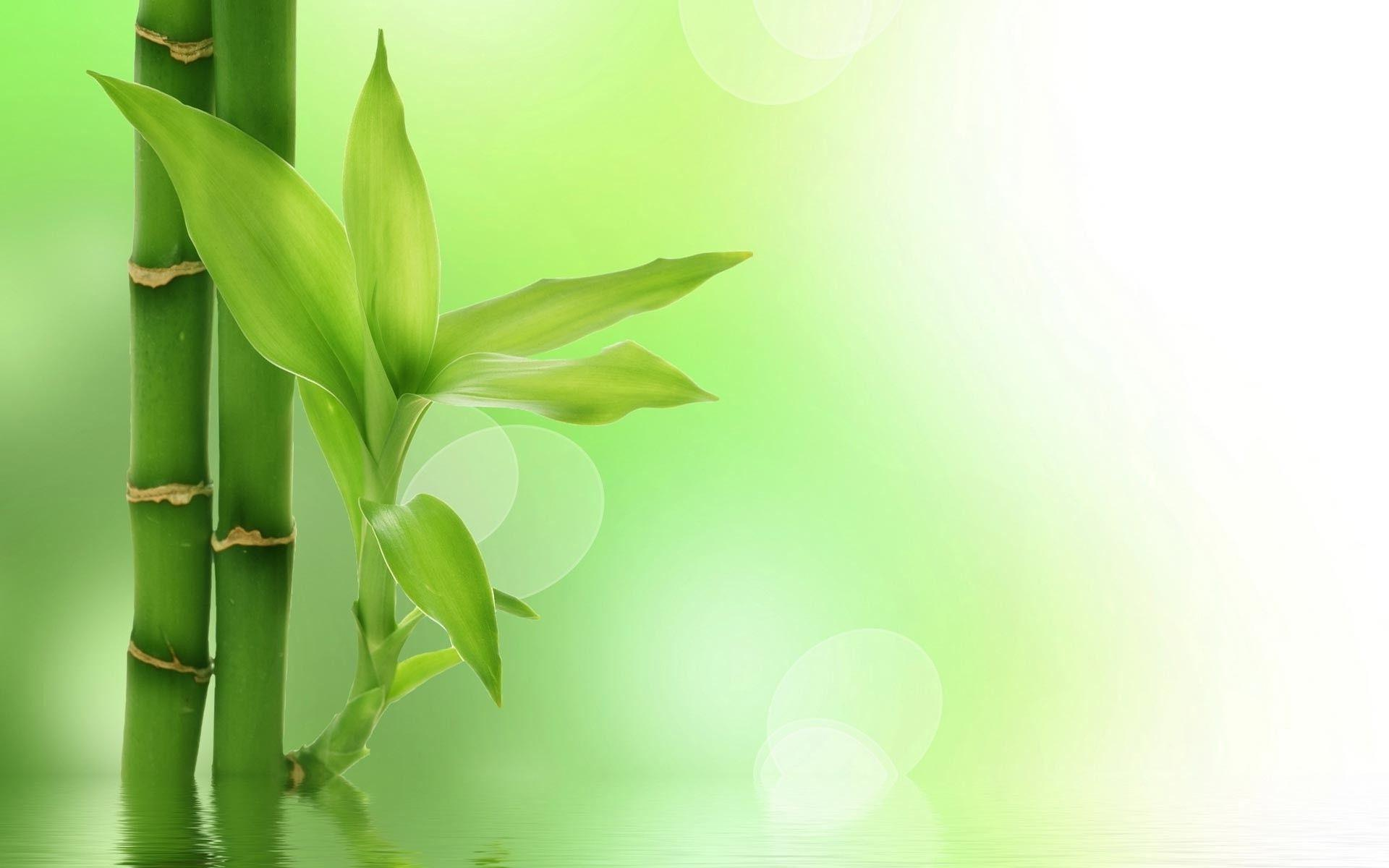 green bamboo wallpapers - wallpaper cave