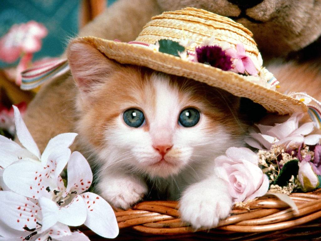 Cute cat backgrounds wallpaper cave wallpapers for very cute cat wallpapers voltagebd Gallery