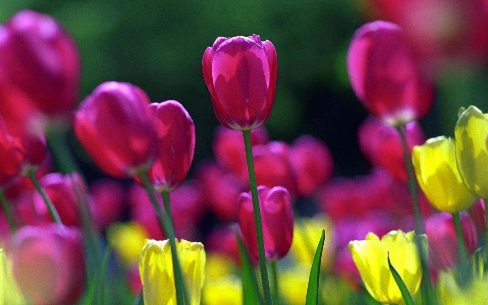 Spring screensavers wallpapers wallpaper cave spring flowers screensavers wallpaper beautiful sweet home mightylinksfo