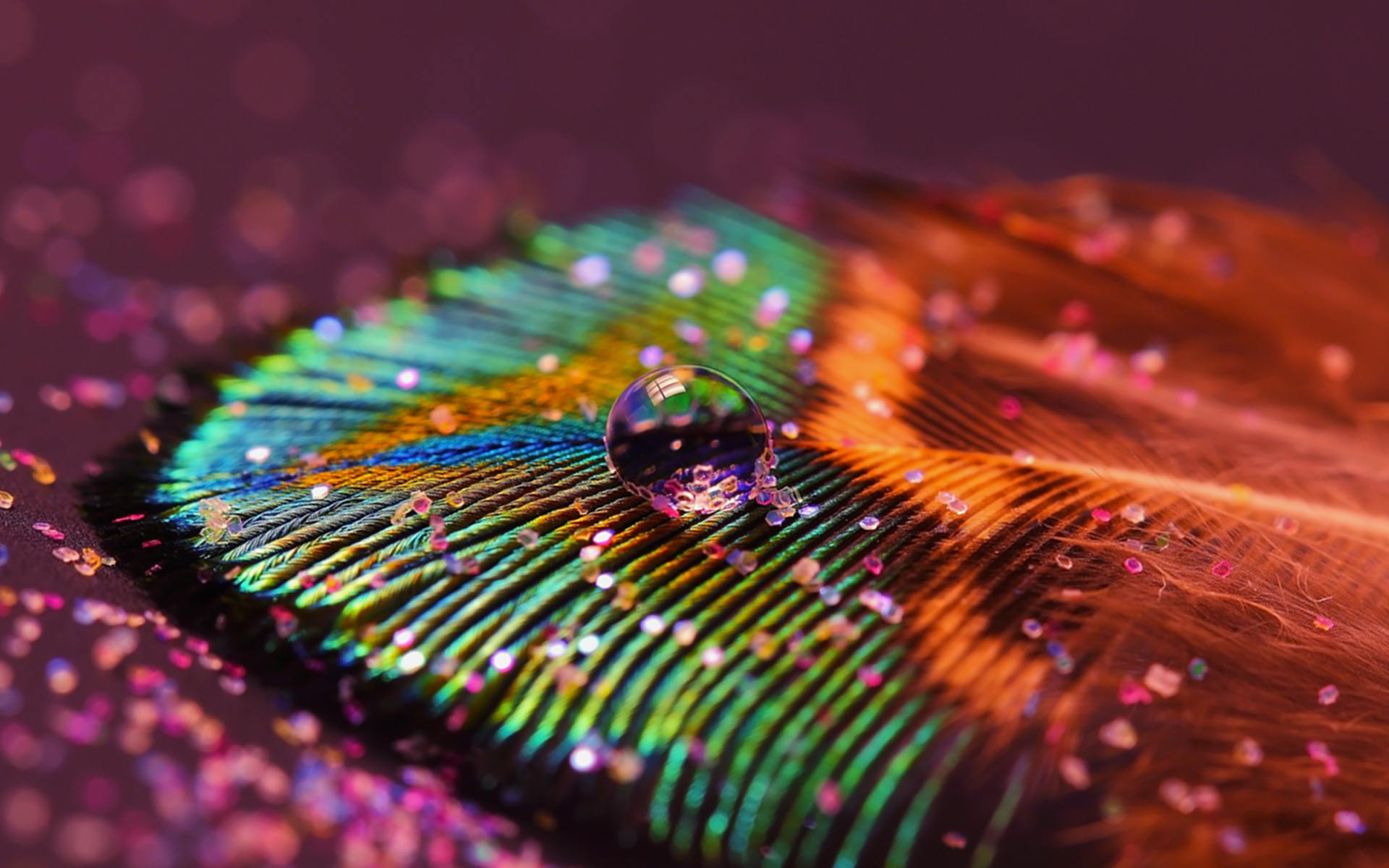 Wallpapers of peacock feathers hd 2015 wallpaper cave for Wallpaper ordinateur