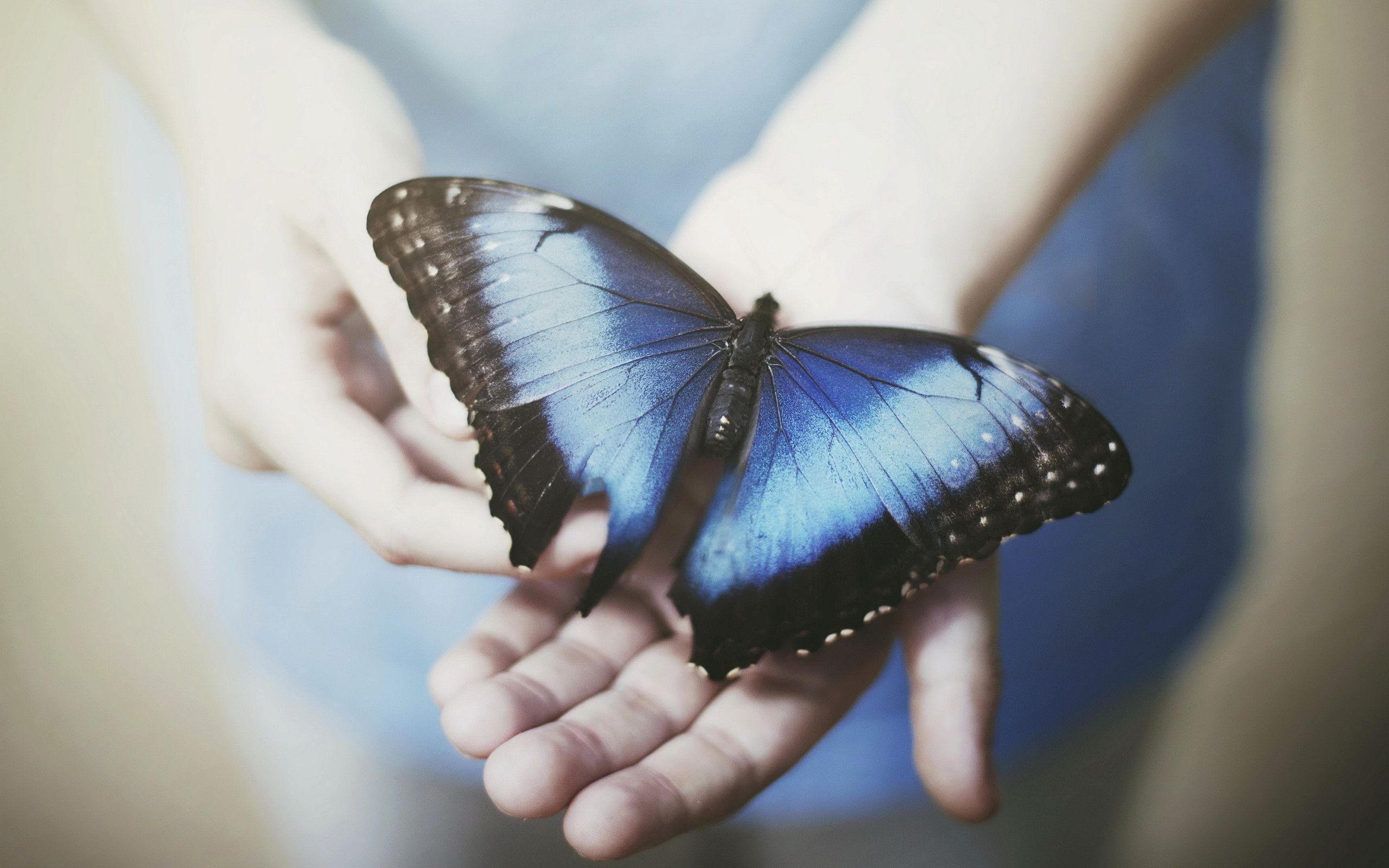 butterfly blue abstract wallpaper - photo #33
