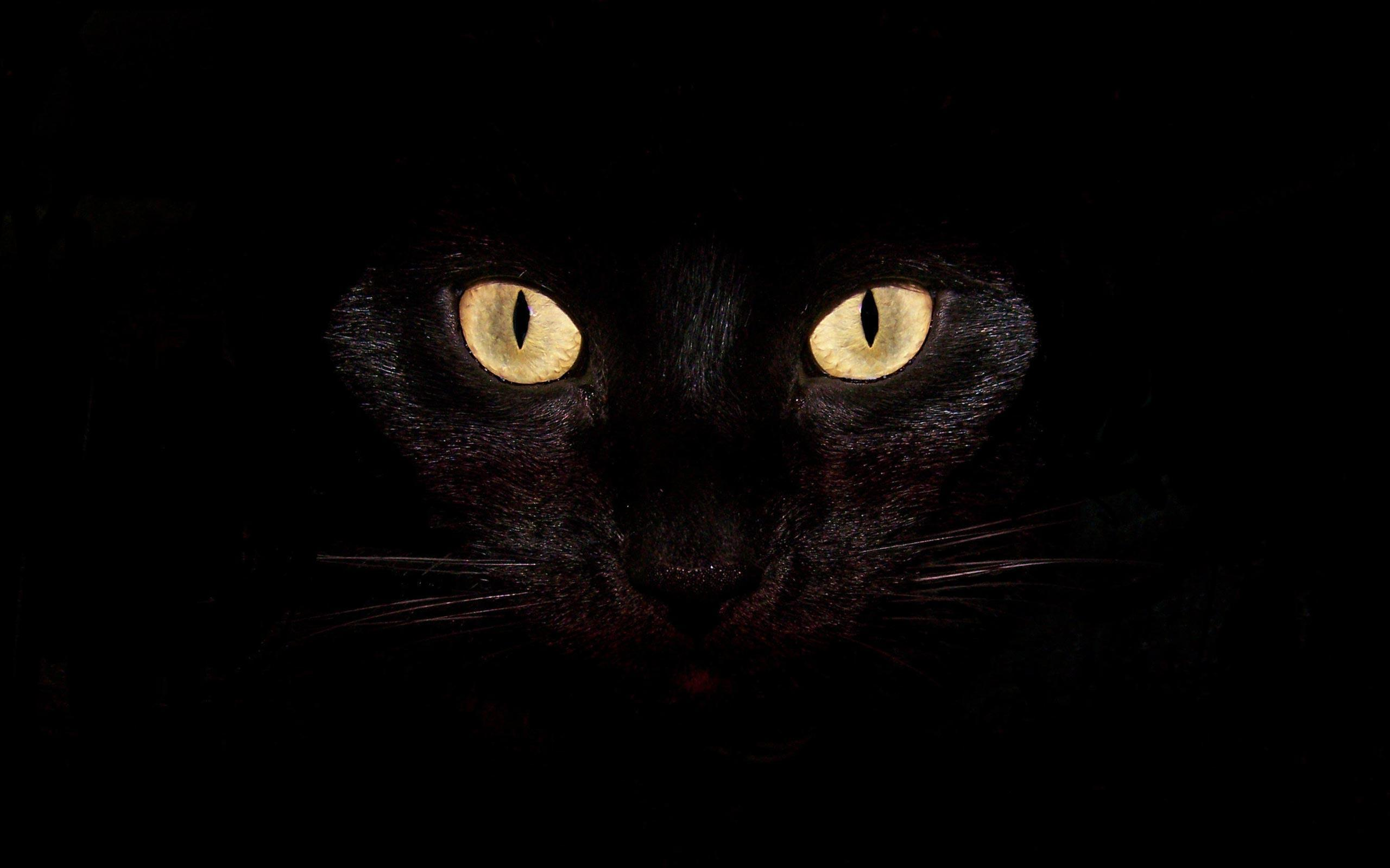 black cat wallpapers full hd wallpaper search page 4