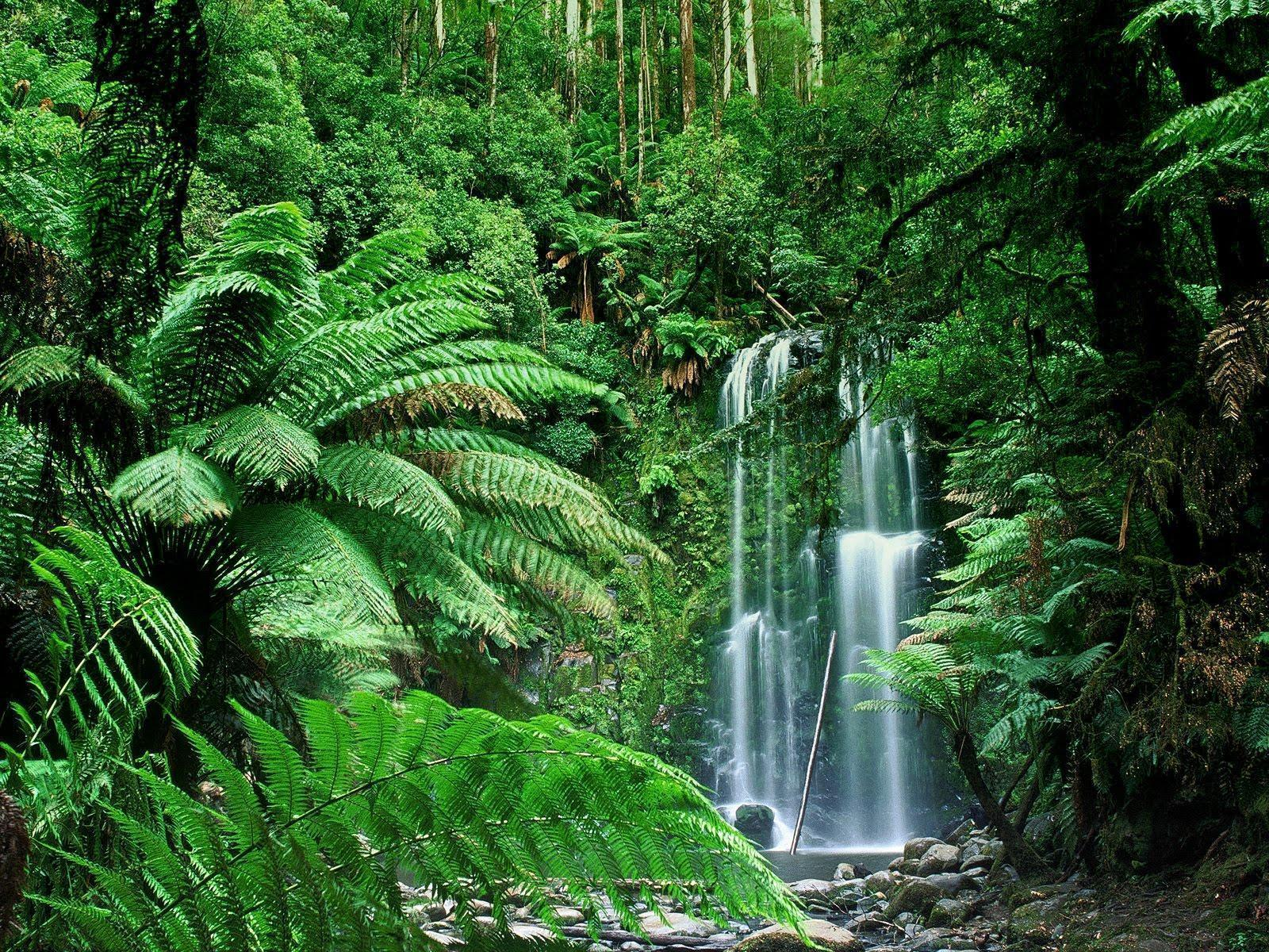 Beauchamp Falls, Victoria, Australia Wallpapers