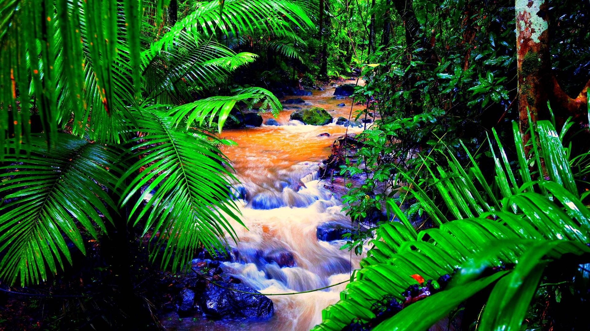 wallpapers 1600x1200 amazon tropical - photo #6