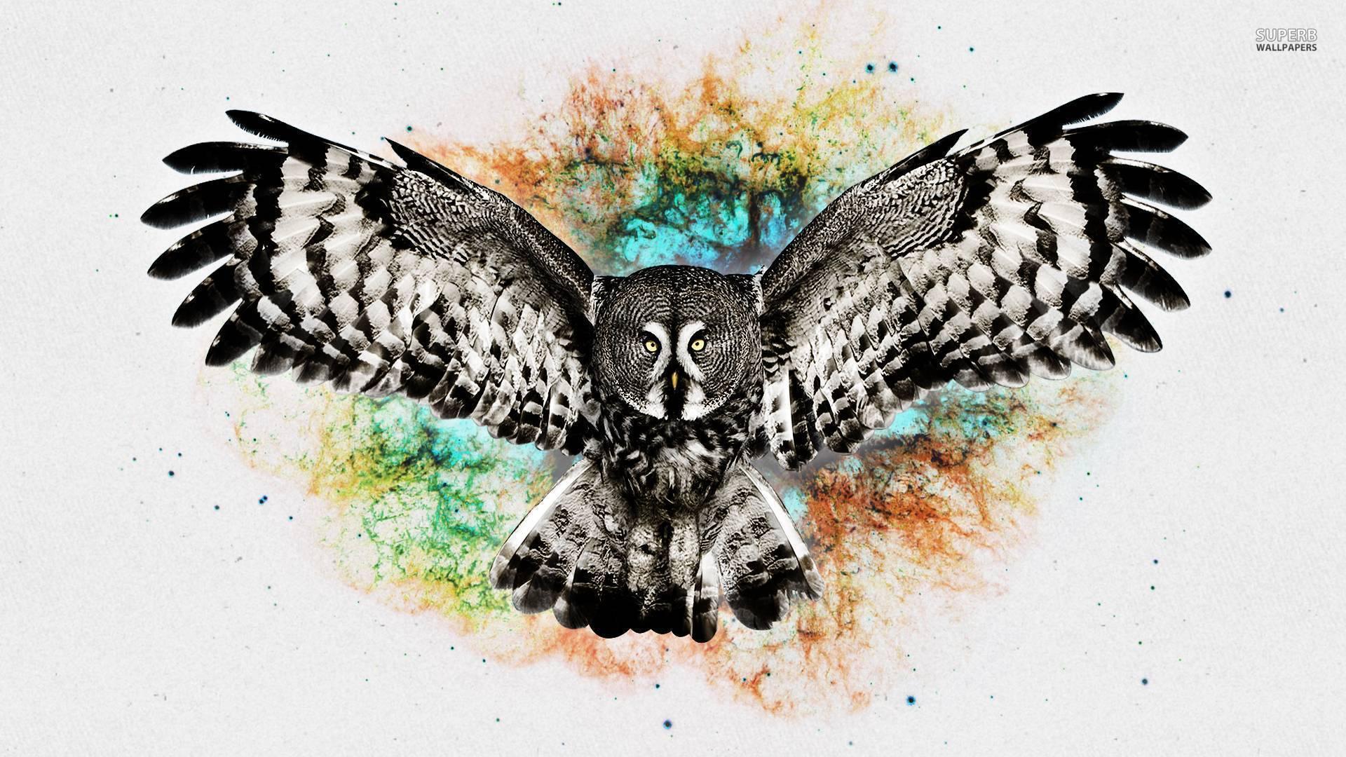 Owl Wallpapers Wallpaper Cave