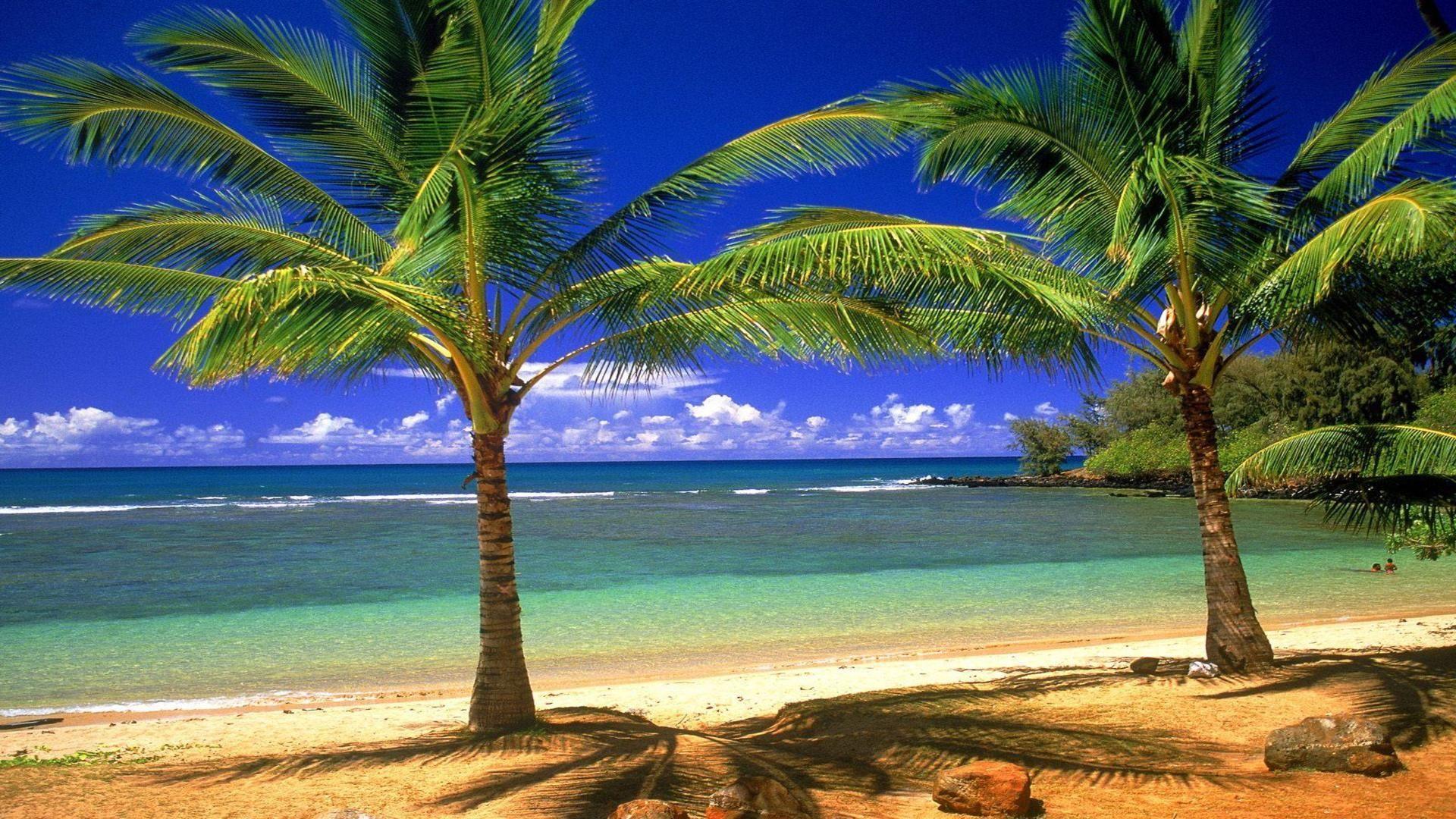Palm tree beach wallpapers wallpaper cave - Free palm tree screensavers ...