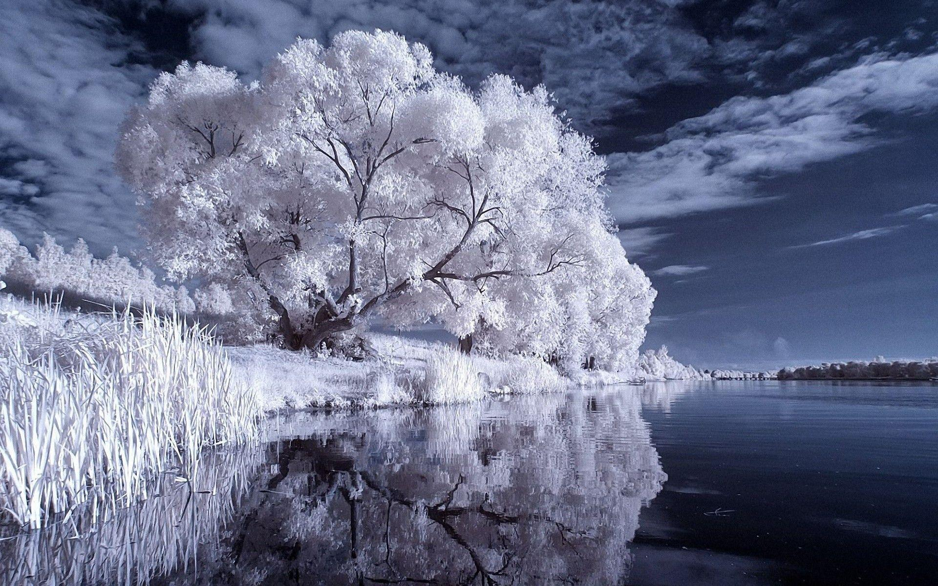 winter trees wallpapers wallpaper cave