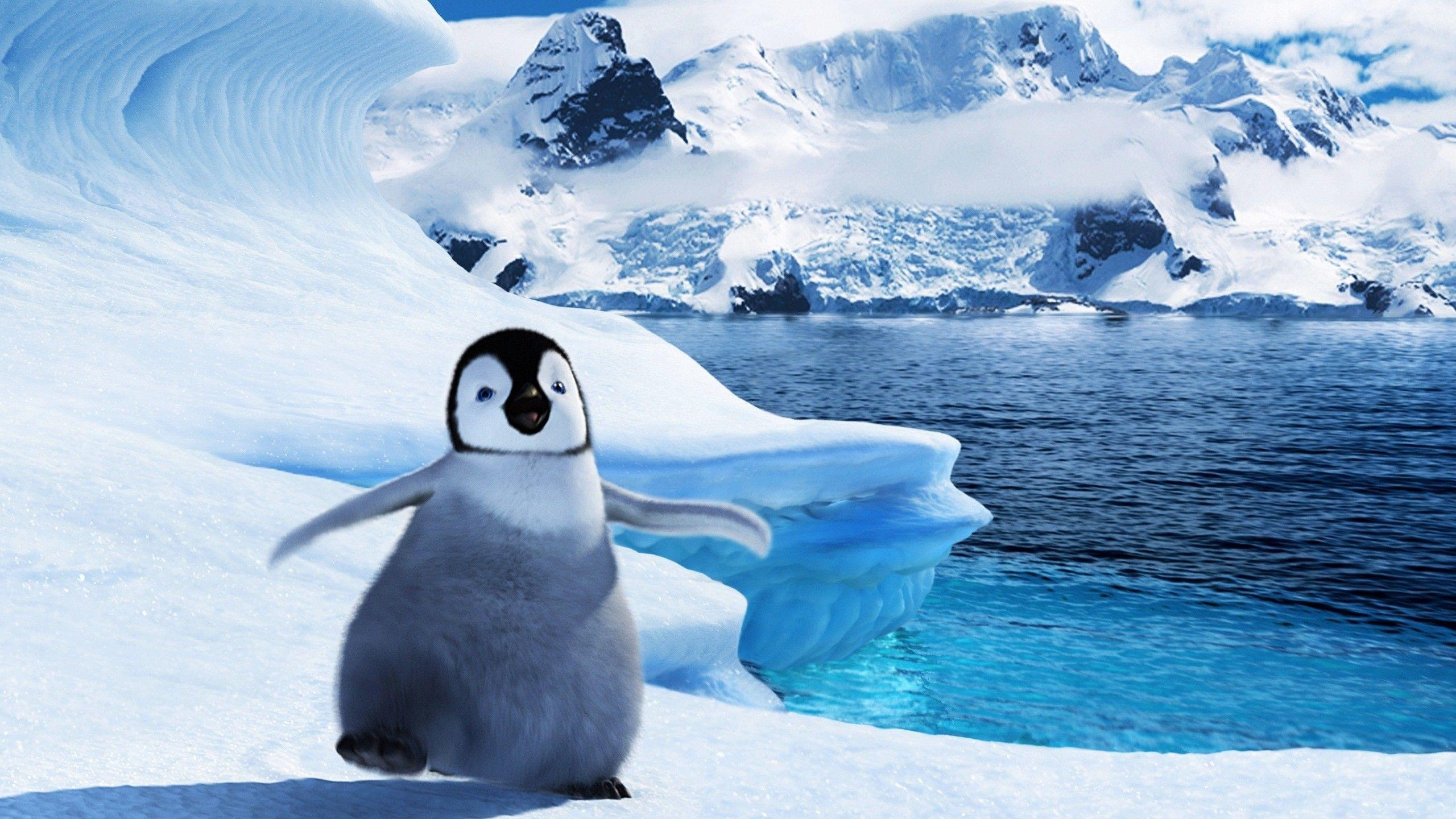 cute penguin backgrounds wallpaper cave