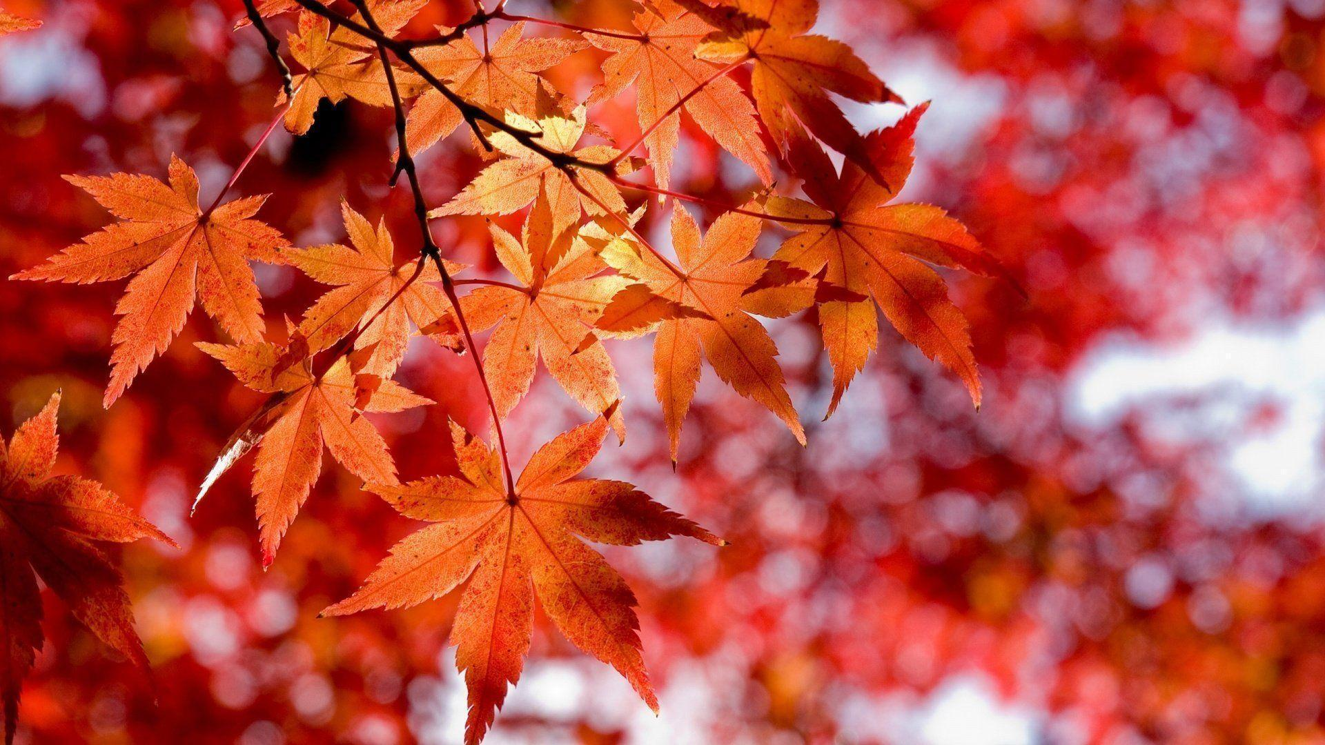 fall flowers wallpaper by - photo #27
