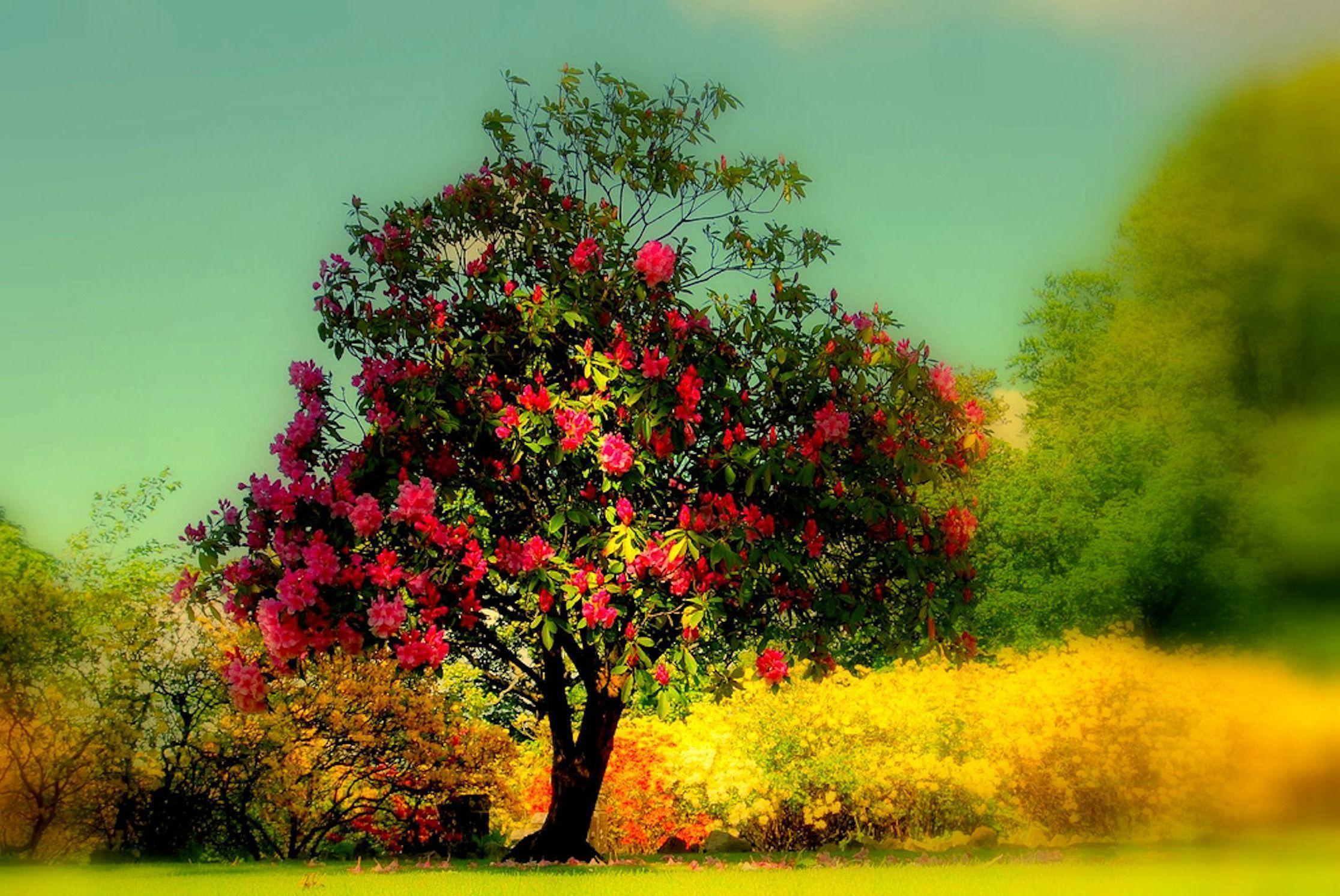 HD Beautiful Tree Wallpaper