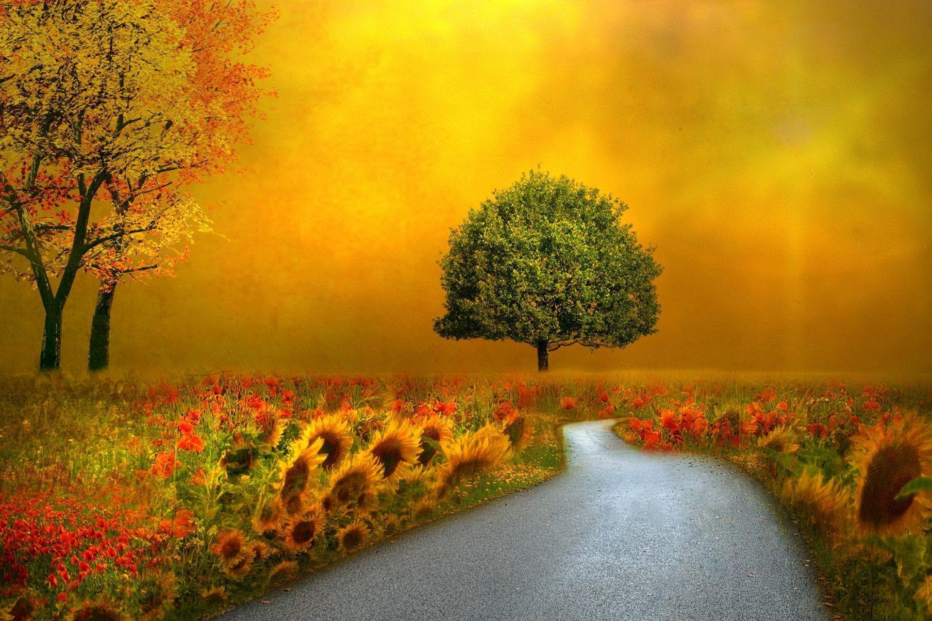 fall flowers wallpaper by - photo #23