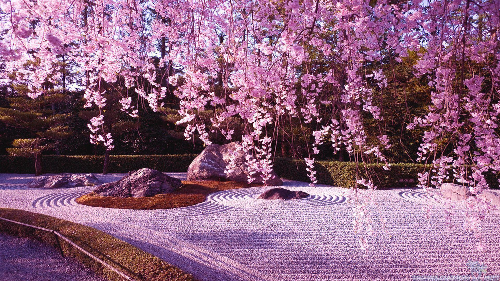 Wallpapers For > Cherry Blossom Tree Anime Wallpaper
