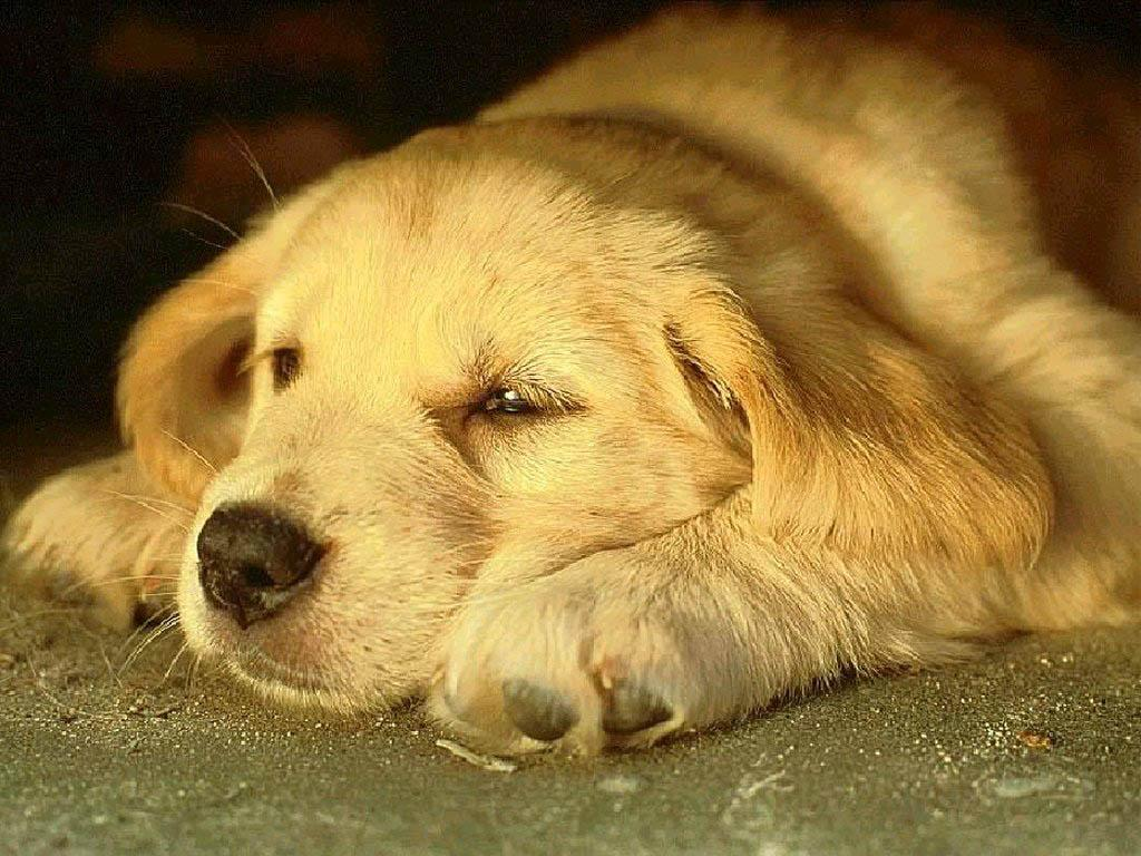Sad Dog Wallpapers High Quality Wallpapers