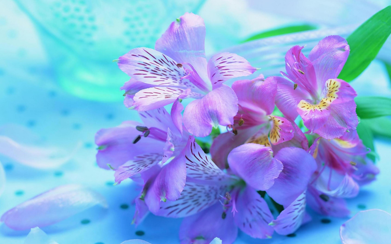 Pretty Purple Flowers White Background Purple Flower Backgrou...