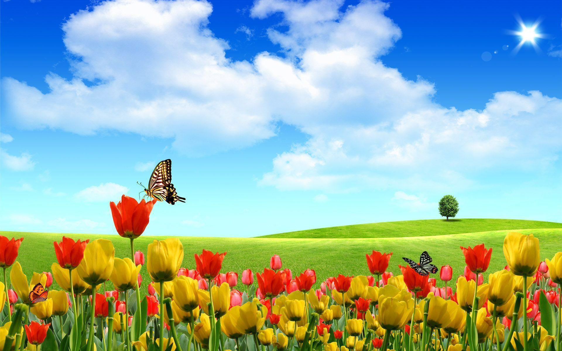 Most Downloaded Windows Xp Wallpapers