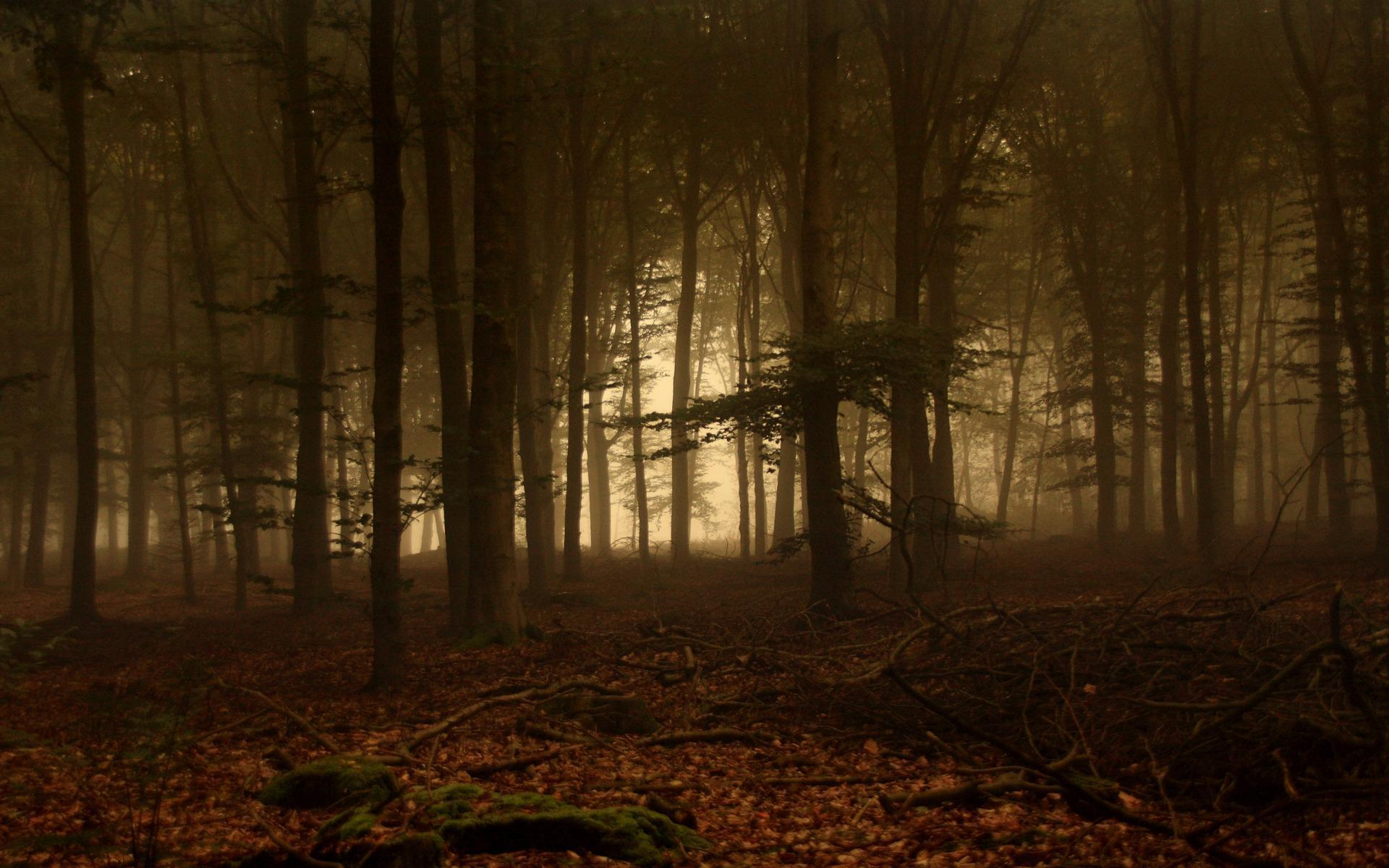 Dark Forest Wallpapers - Full HD wallpaper search - page 4