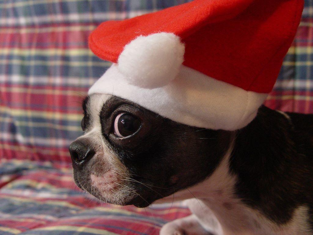 christmas puppy wallpaper - photo #39