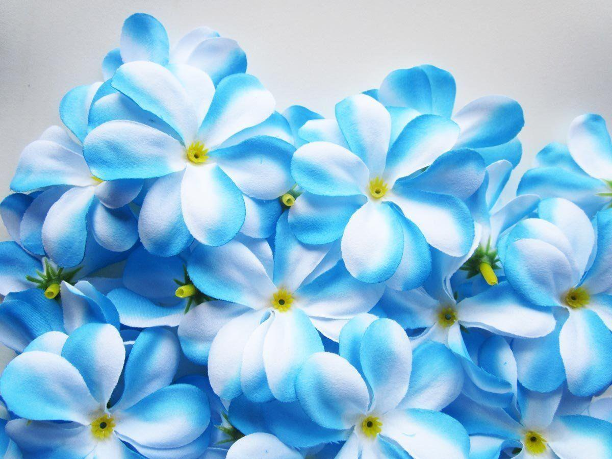 Blue Flowers Wallpapers - Wallpaper Cave Light Blue Flower Wallpaper