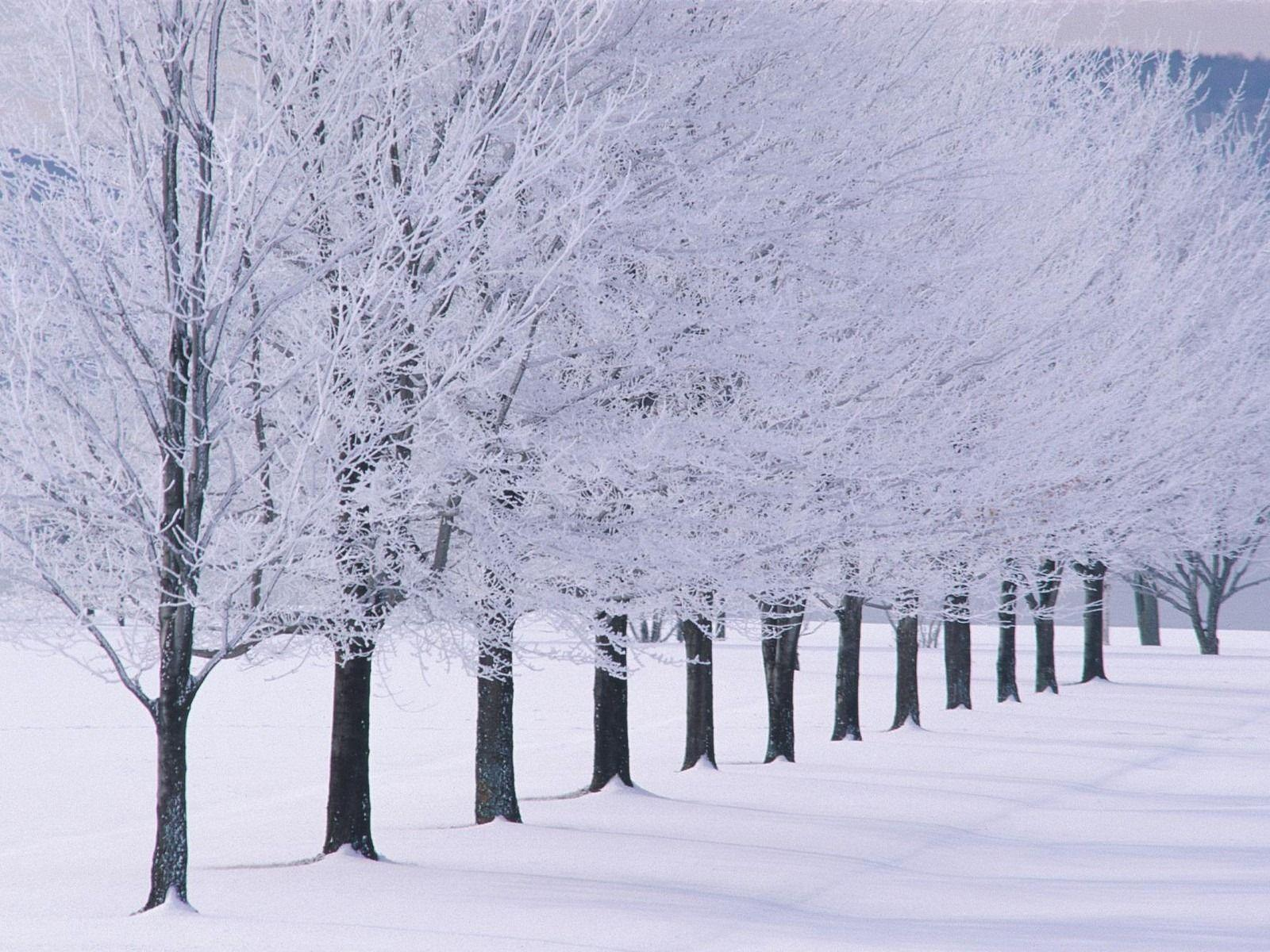 Winter HD Desktop Wallpaper