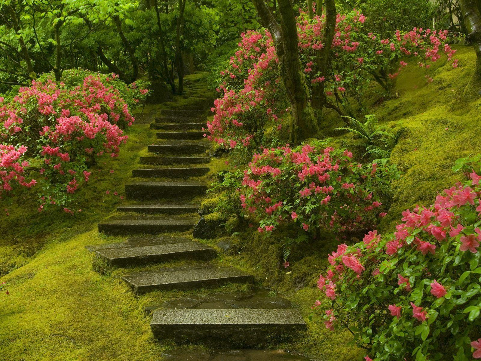 Japanese Garden Washington Park Wallpapers | HD Wallpapers