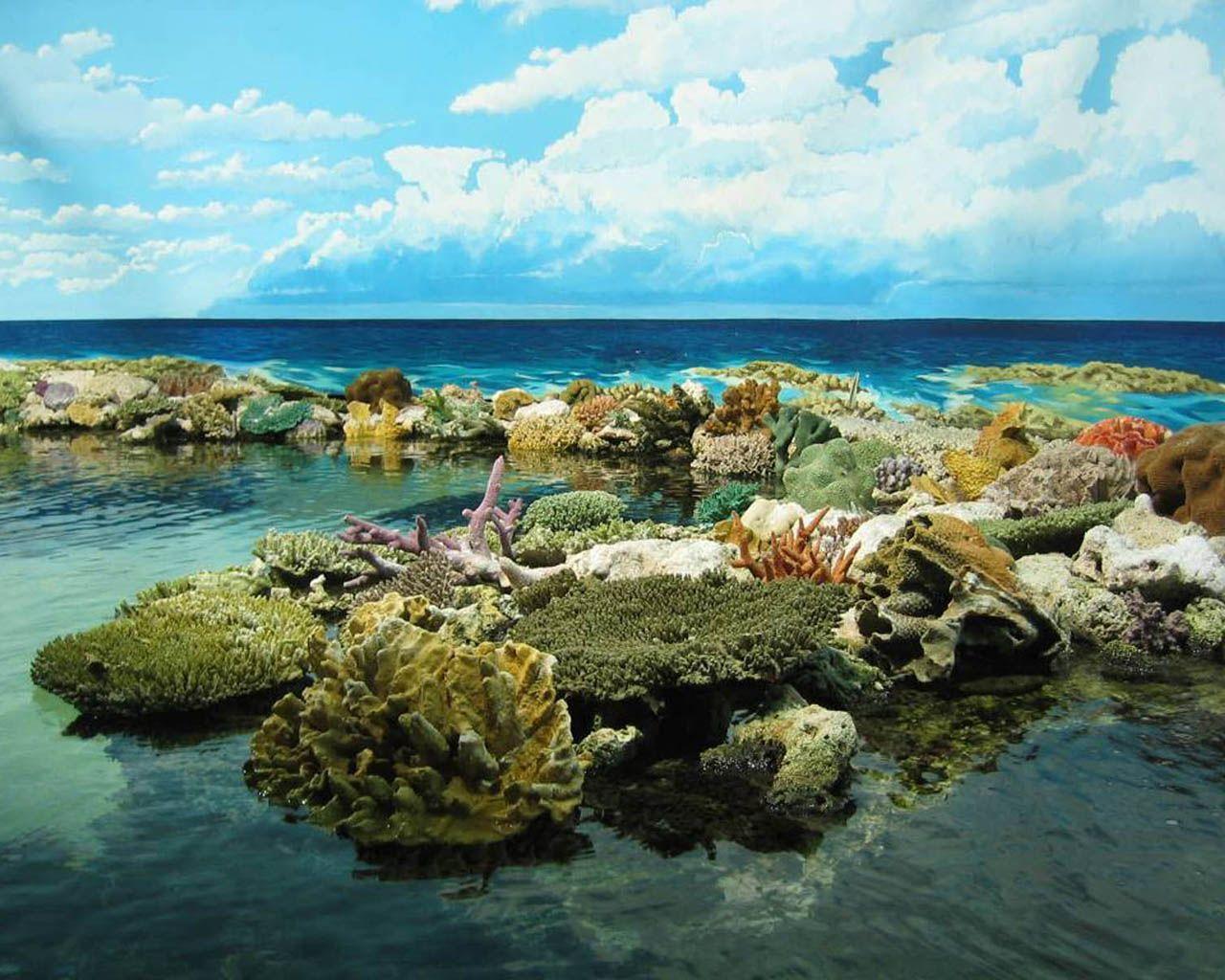 Great Barrier Reef Wallpapers - Wallpaper Cave
