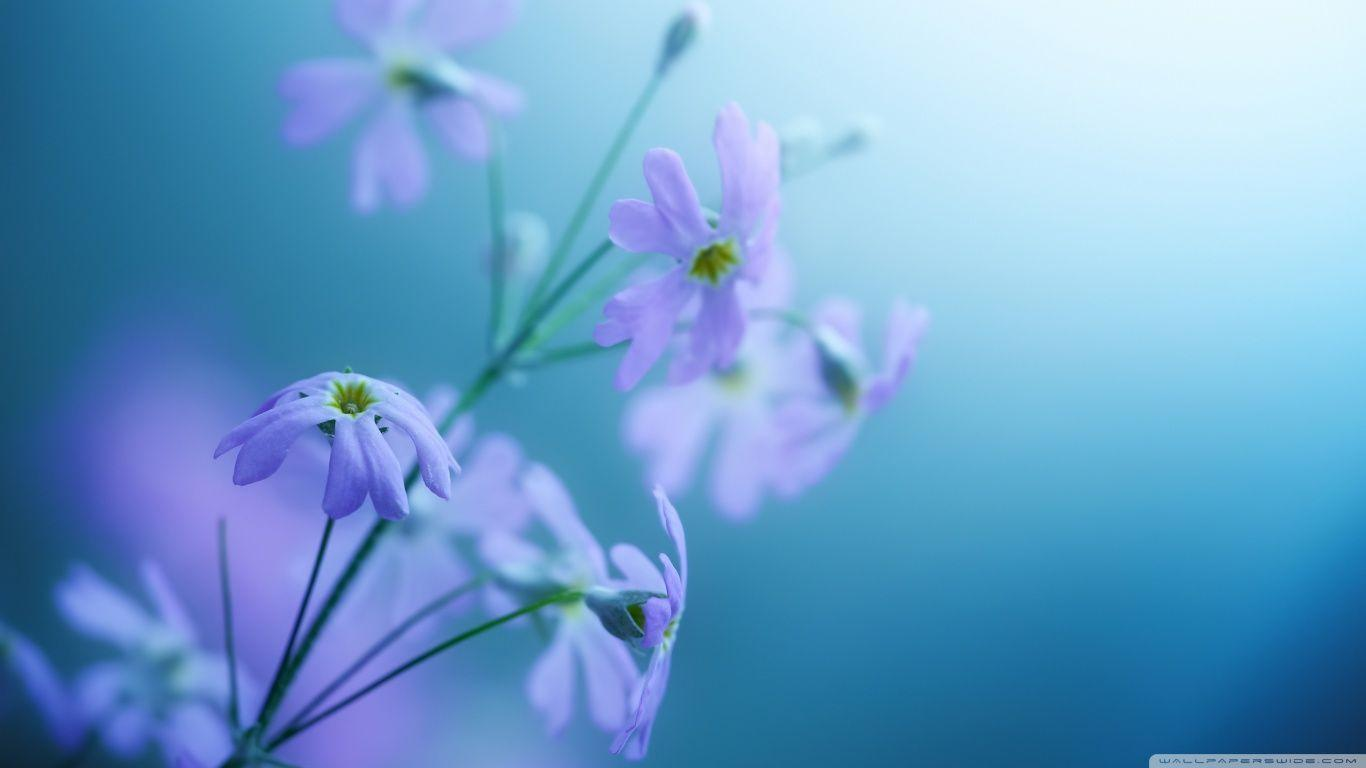 violet backgrounds wallpapers Archives