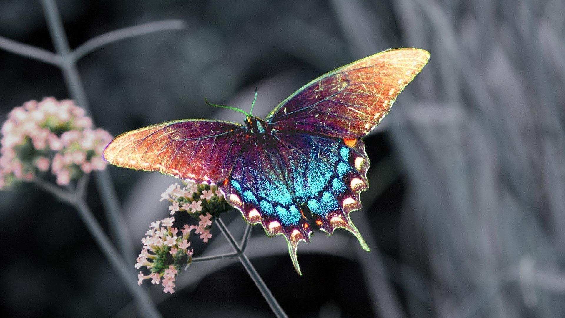 Flowers With Butterfly Wallpapers Hd Wallpaper Cave
