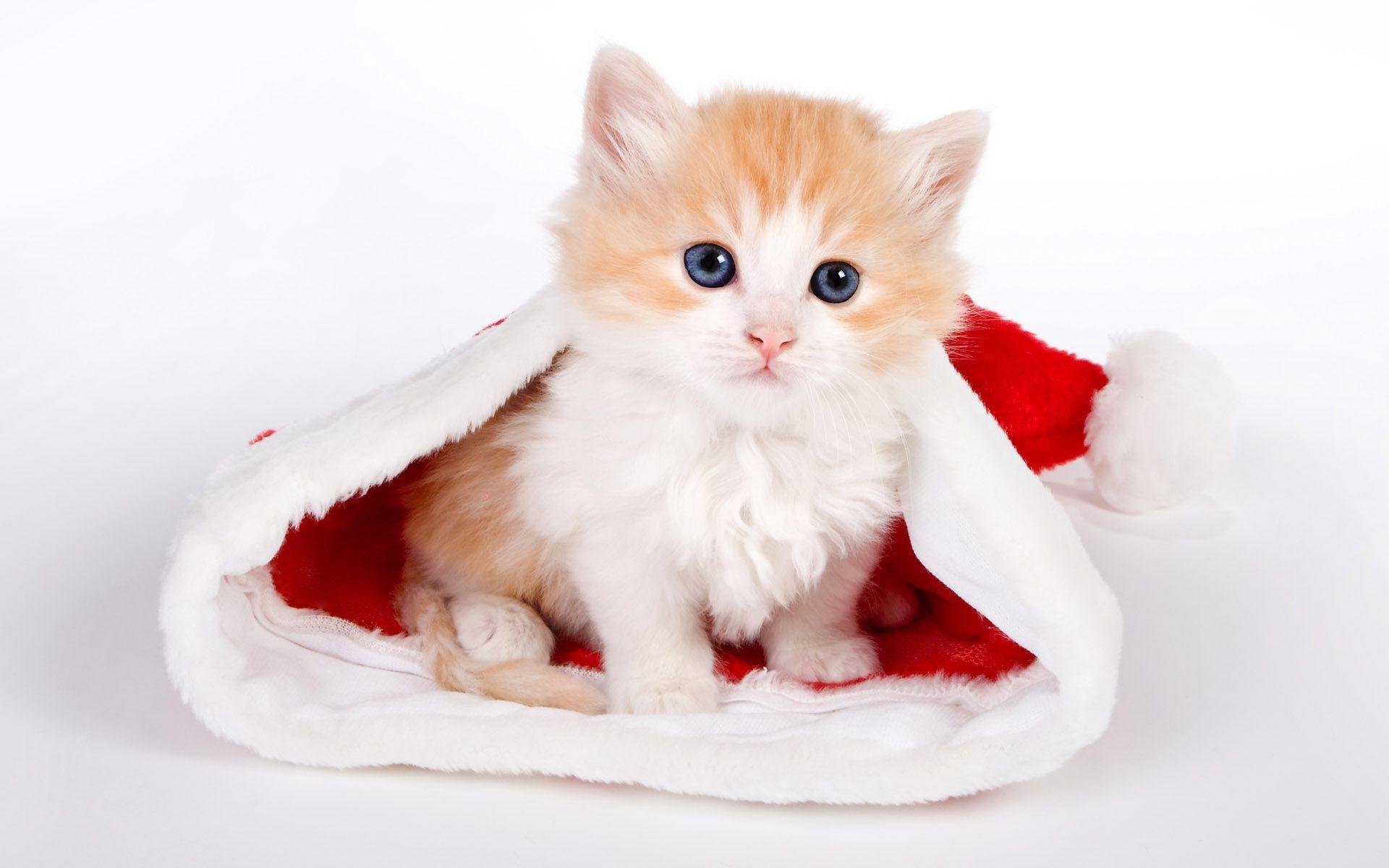 Wallpaper download cute - Cute Cat Background Hd Wallpaper For Desktop Beraplan