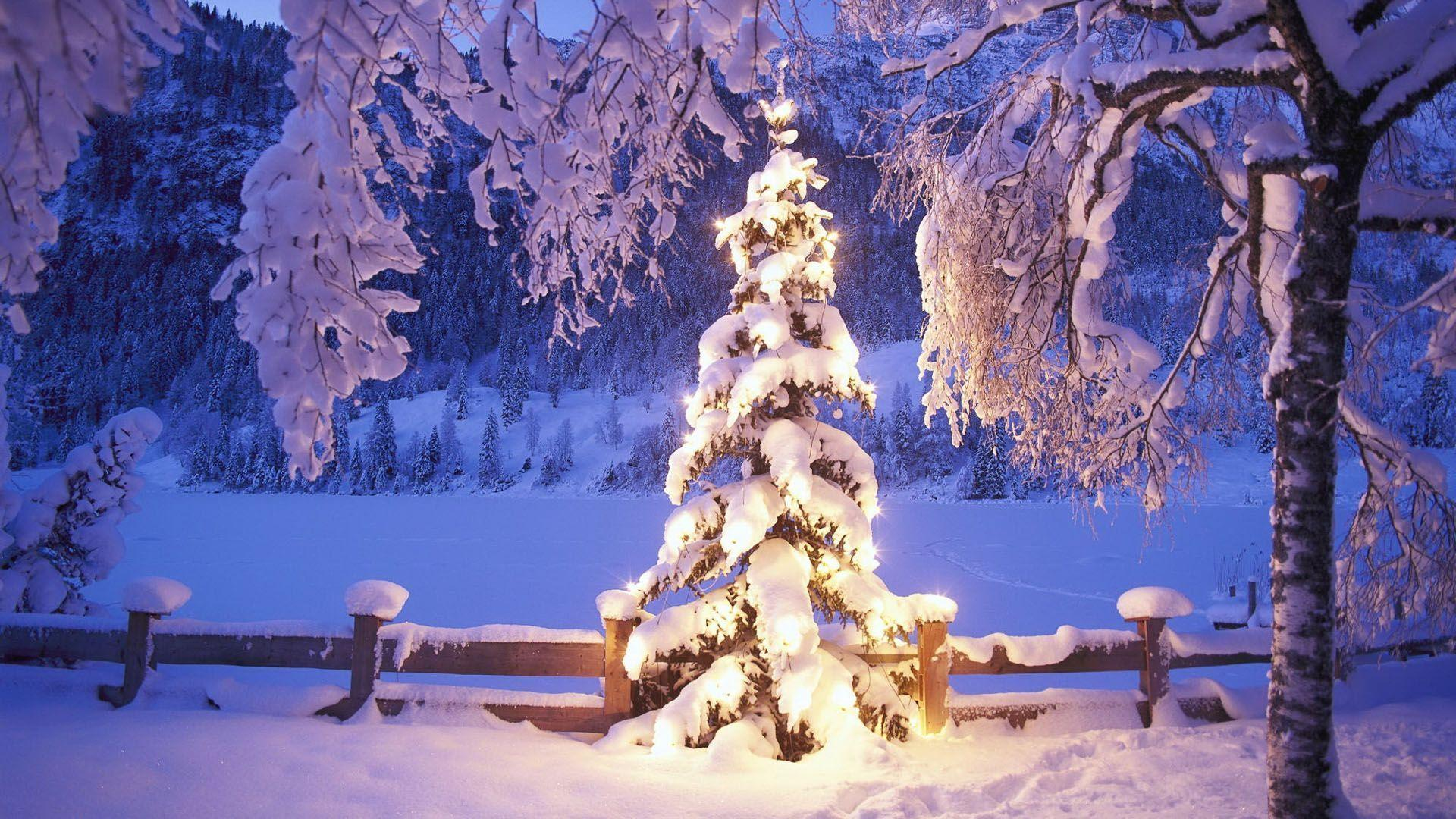Wallpapers For > Christmas Tree Wallpapers 1920x1080