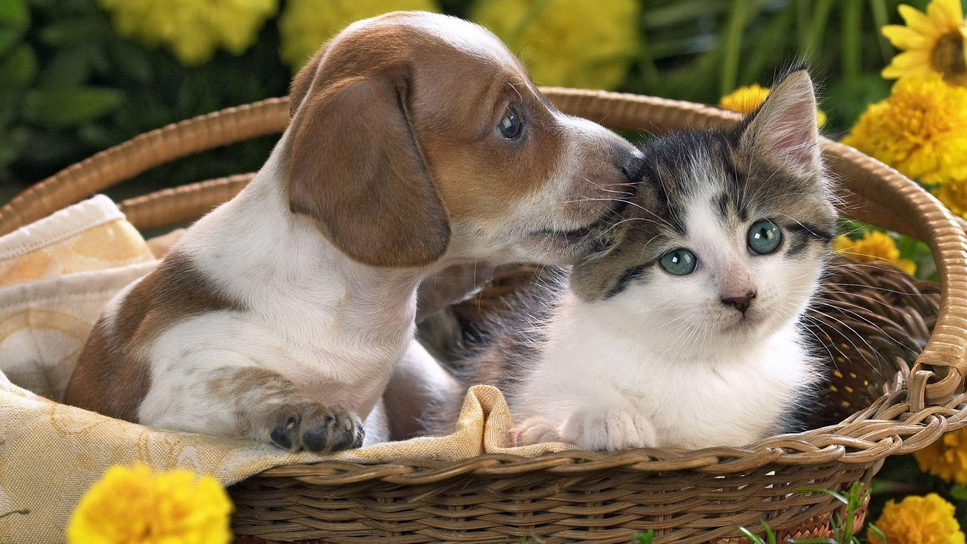 Cute Puppy And Kitten Wallpapers Image & Pictures