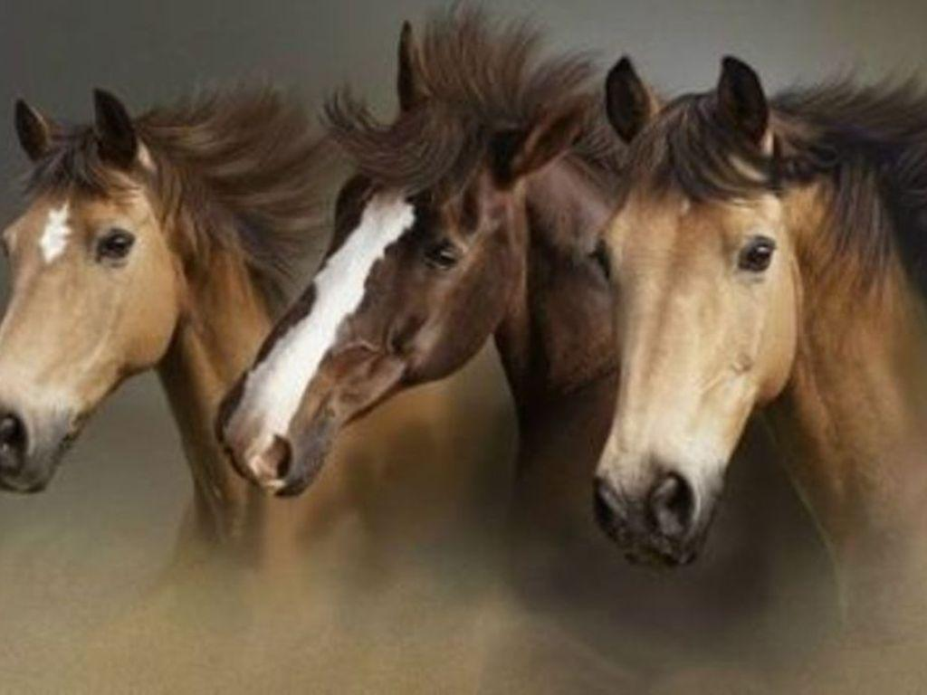 wild horses racing wallpaper - photo #17