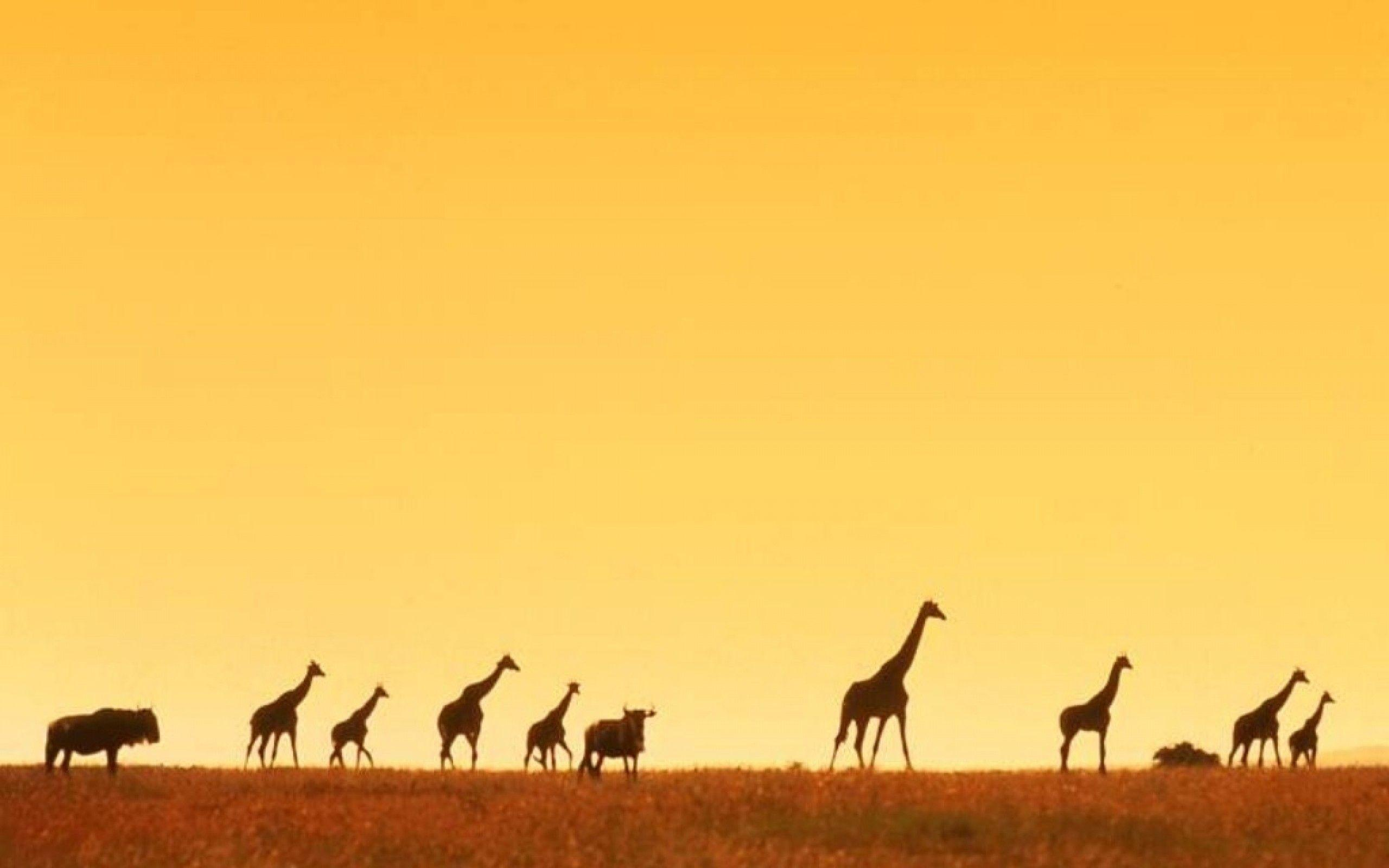 giraffe africa wallpaper - Animal Backgrounds