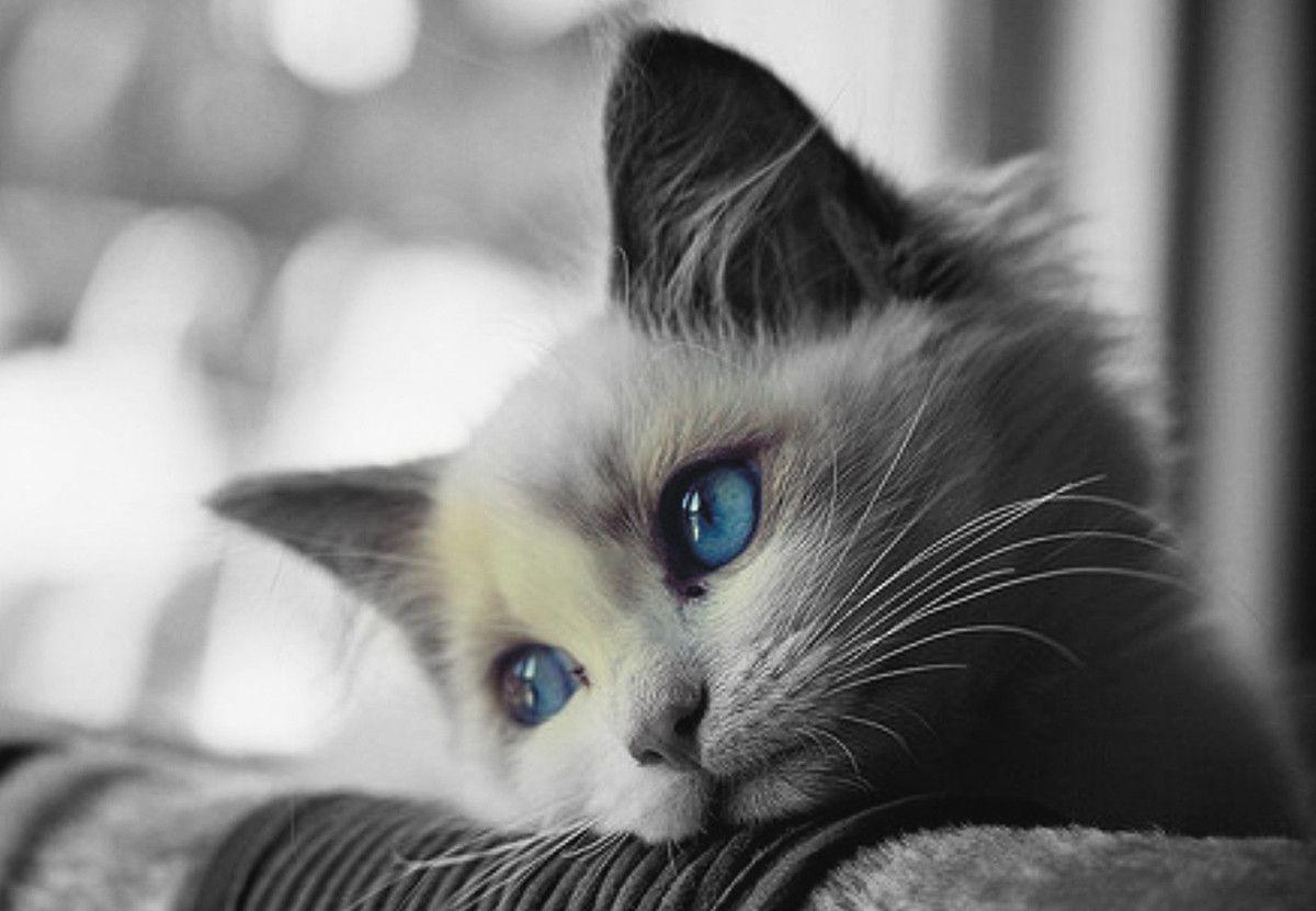 Hd wallpaper sad - Cat Sad Wallpaper High Resolution Jpeg 32553 3814 Wallpaper