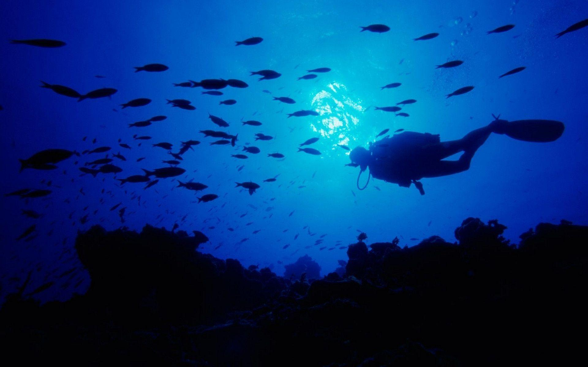 scuba diving wallpaper wallpapers - photo #2
