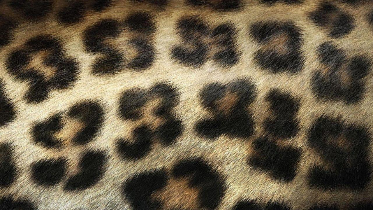 this animal print desktop - photo #17