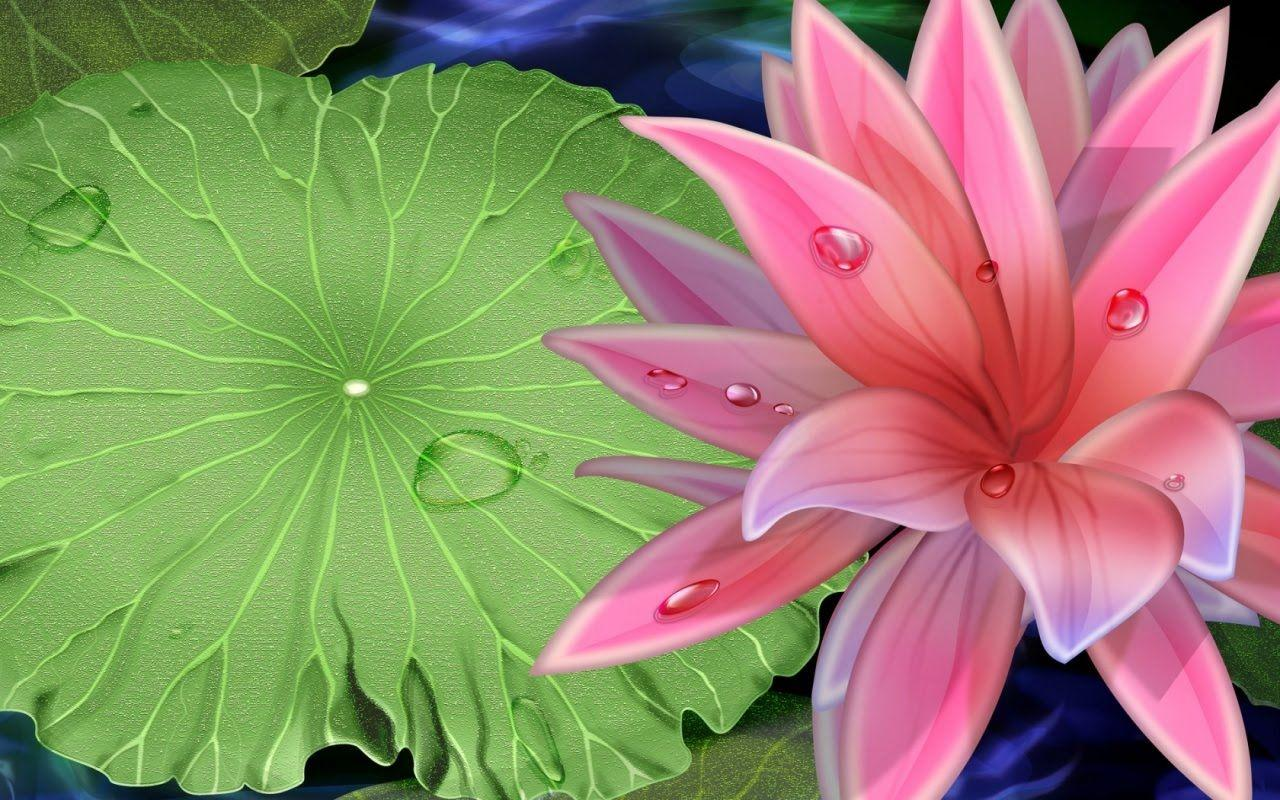 Pink Beauty Lotus Flower Desktop Wallpapers Download Free