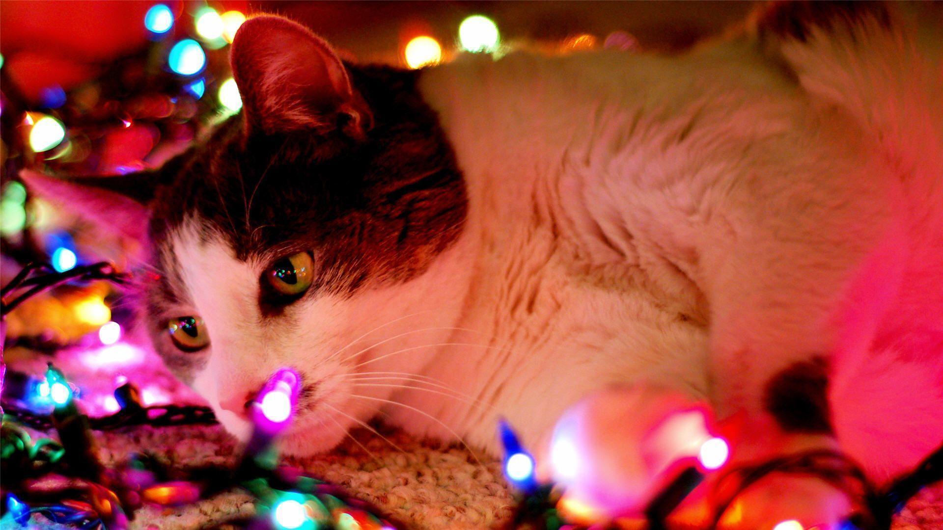 Christmas Cat Wallpapers Wallpaper Cave