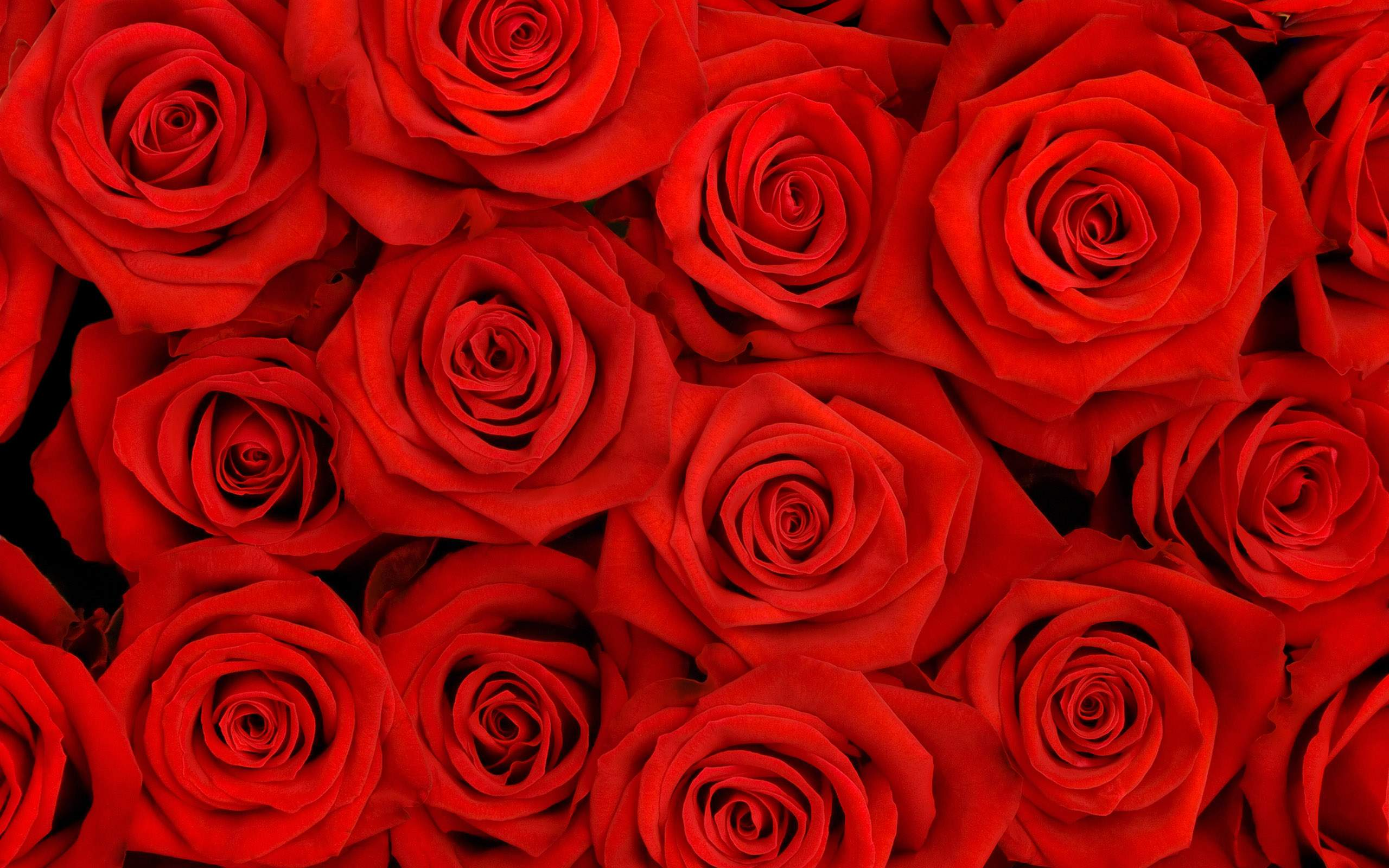 Red Flowers Wallpapers - Wallpaper Cave