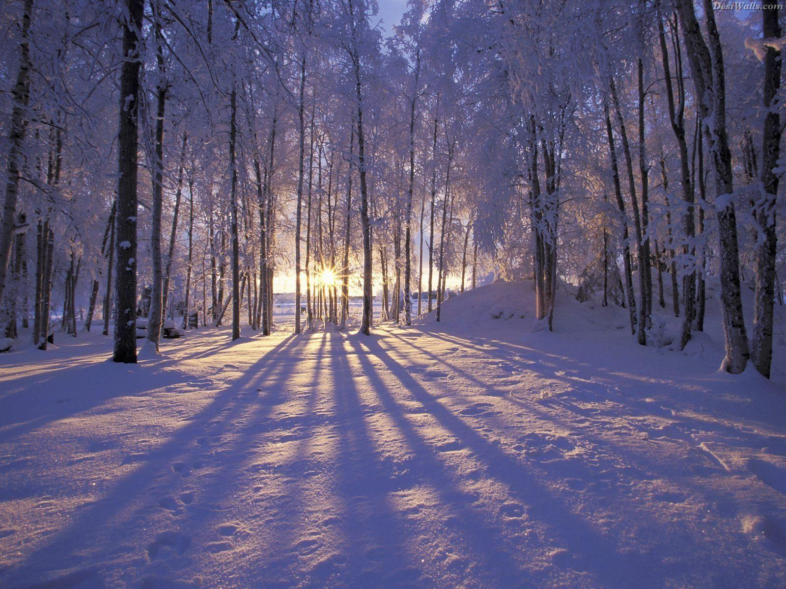 Wondeful Winter wallpaper - cynthia-selahblue (cynti19) Wallpaper ...
