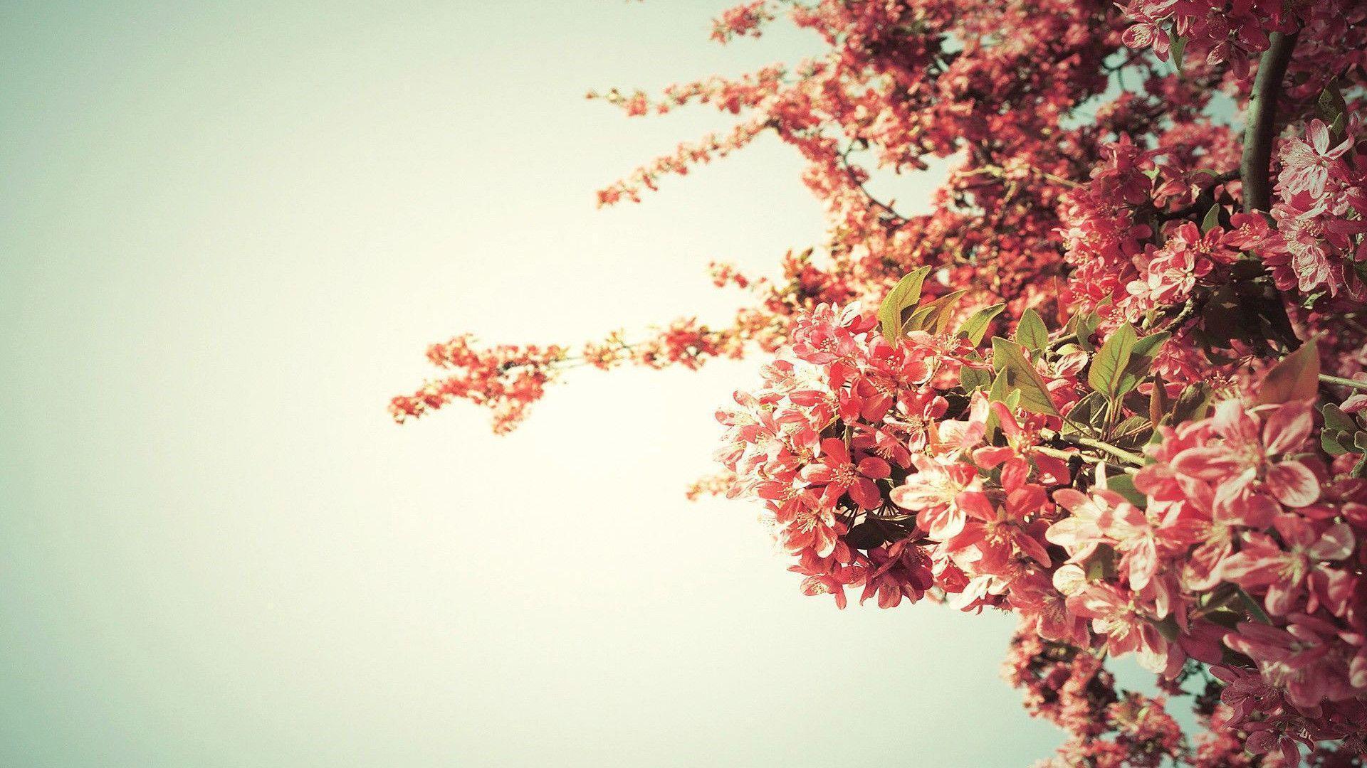 Spring tree blossoms Wallpaper #
