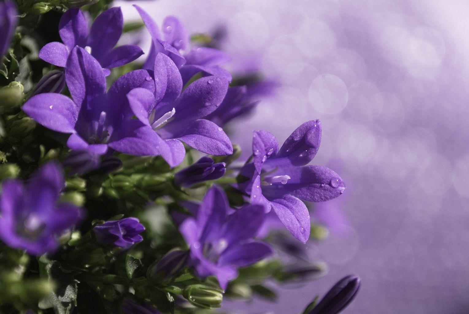 Cool purple wallpapers wallpaper cave for Sfondi hd viola
