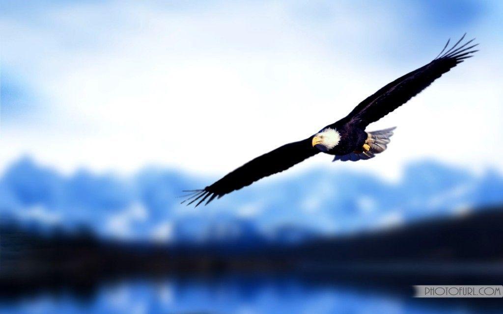 eagle desktop wallpapers wallpaper cave