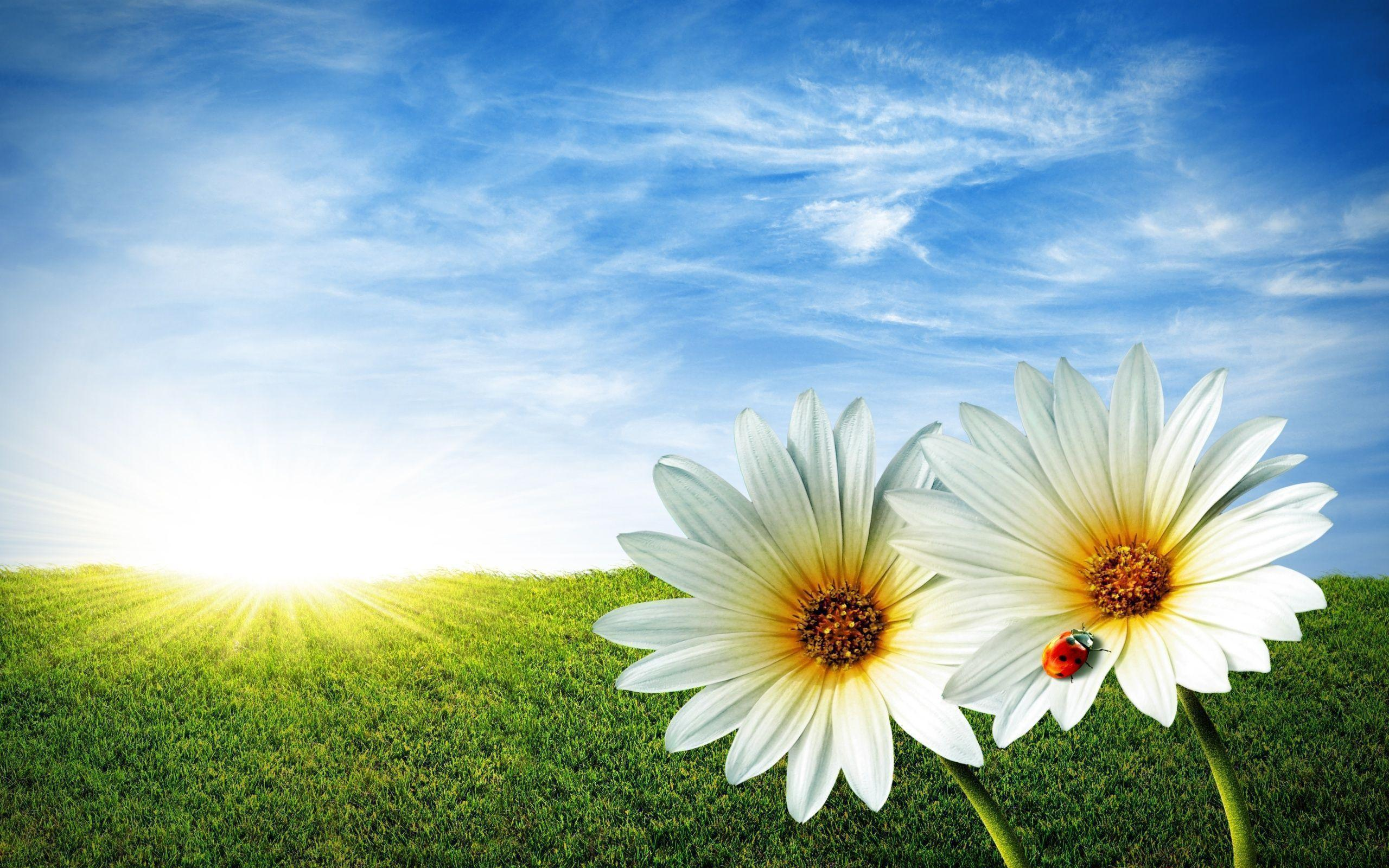 Flowers with Beautiful Landscape Wallpapers and Stock Photo