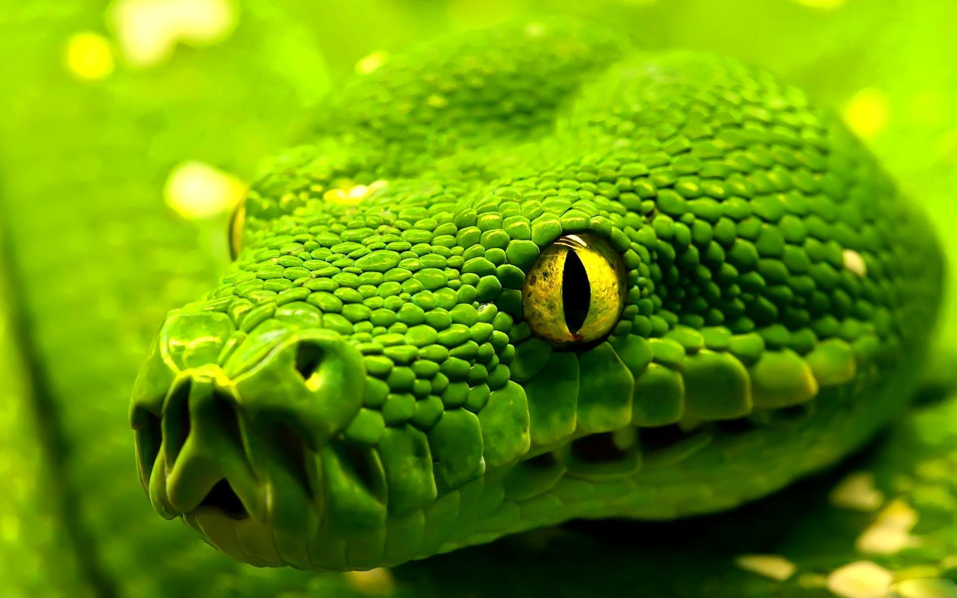 Most Downloaded Snake Wallpapers - Full HD wallpaper search