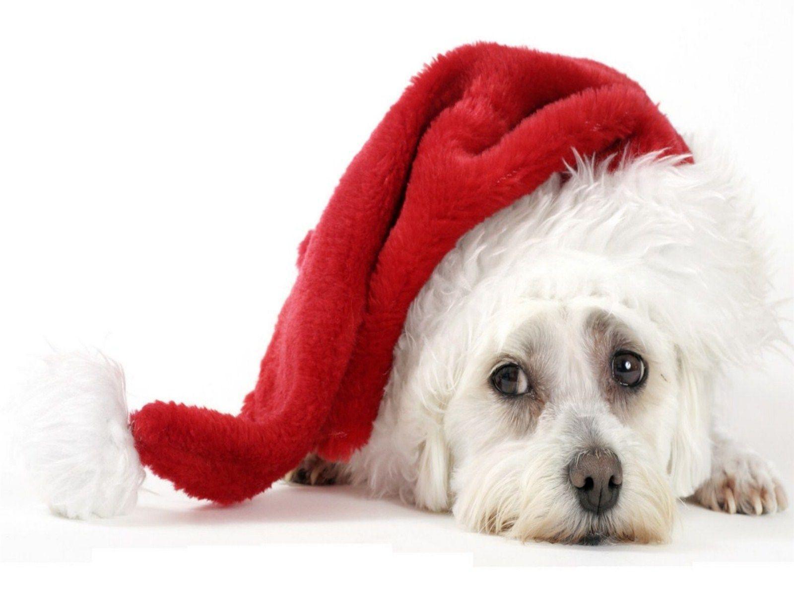 christmas puppy wallpaper - photo #30