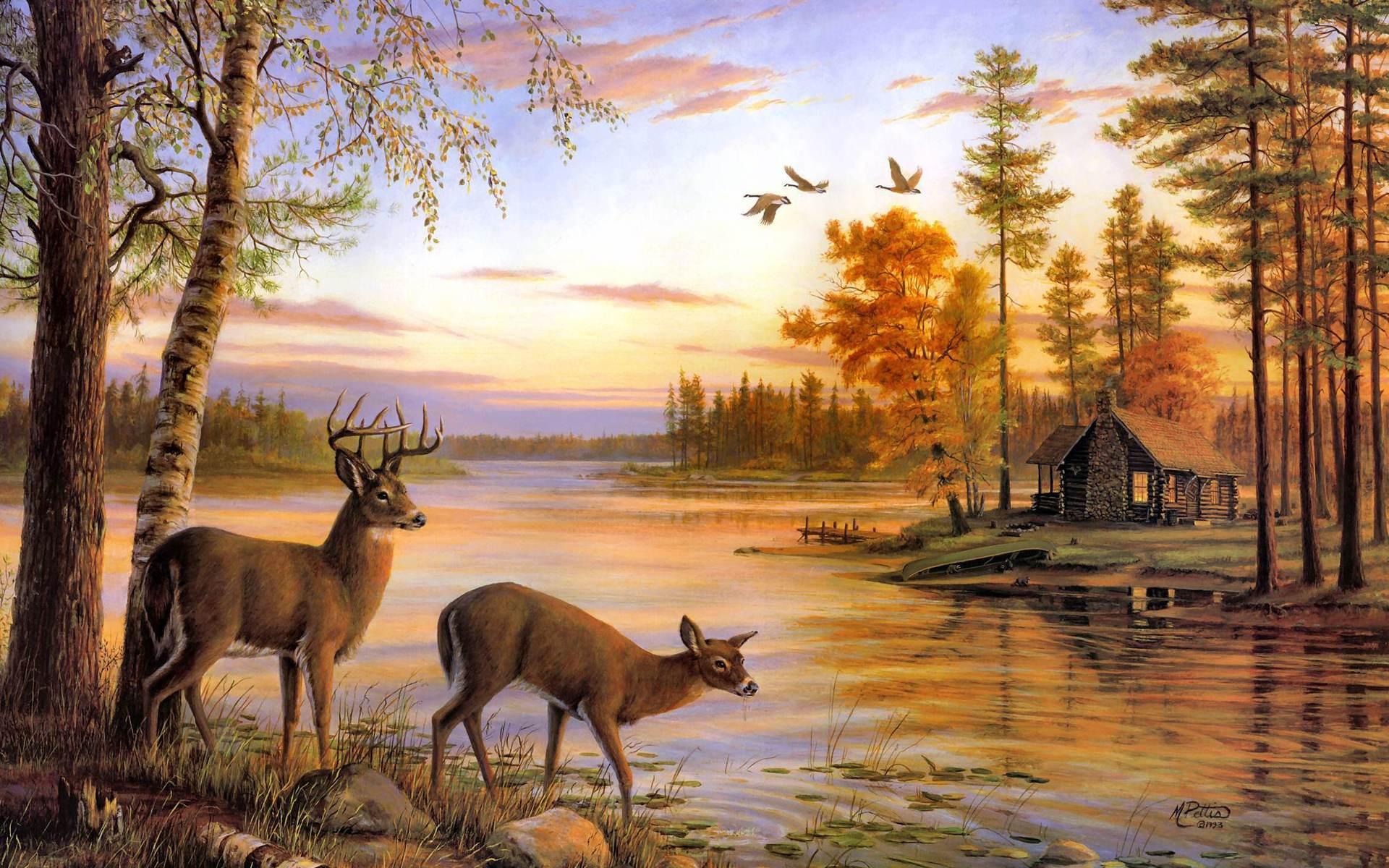 free deer wallpapers wallpaper cave