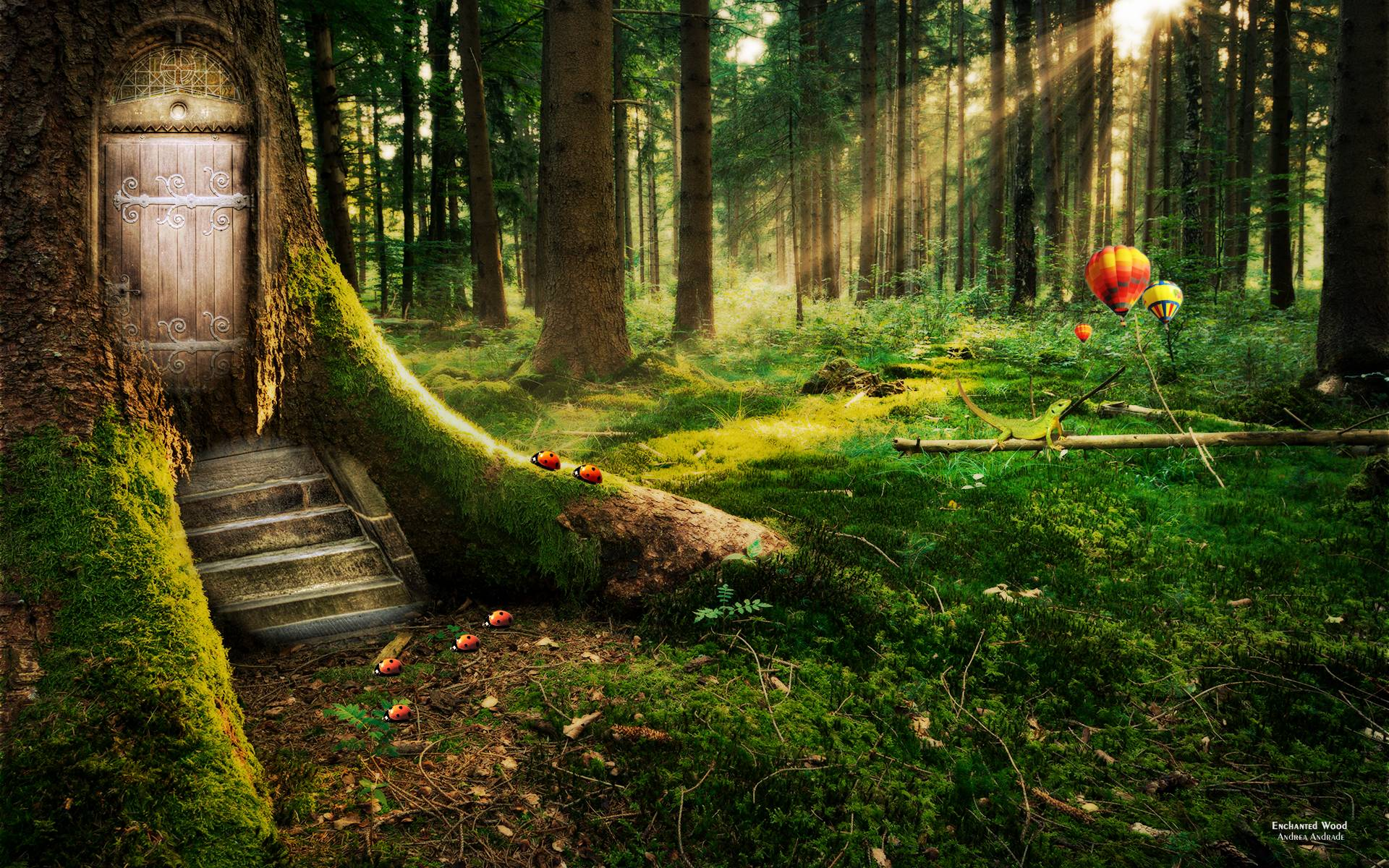 Images For Dark Enchanted Forest Background