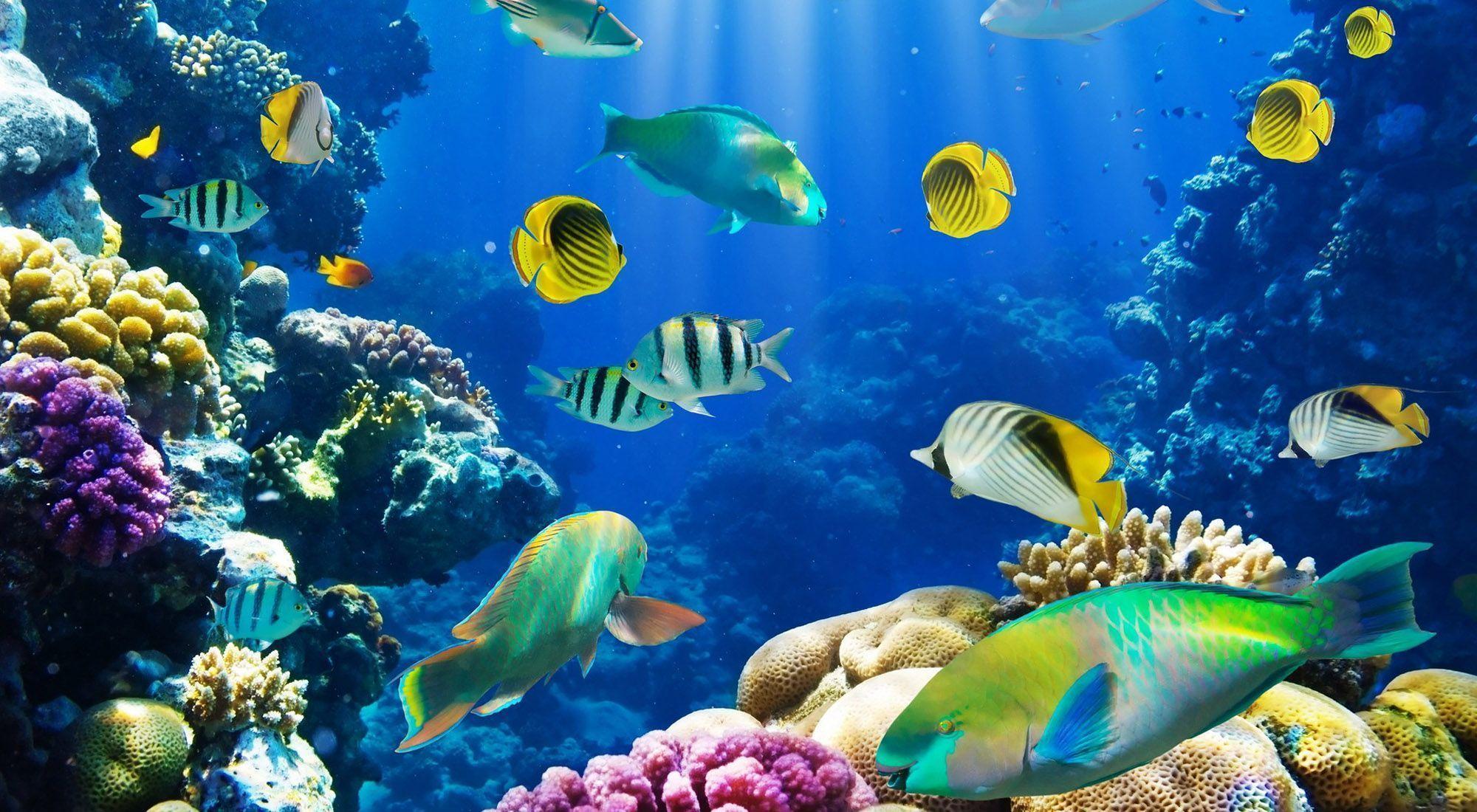 fish desktop wallpapers wallpaper cave