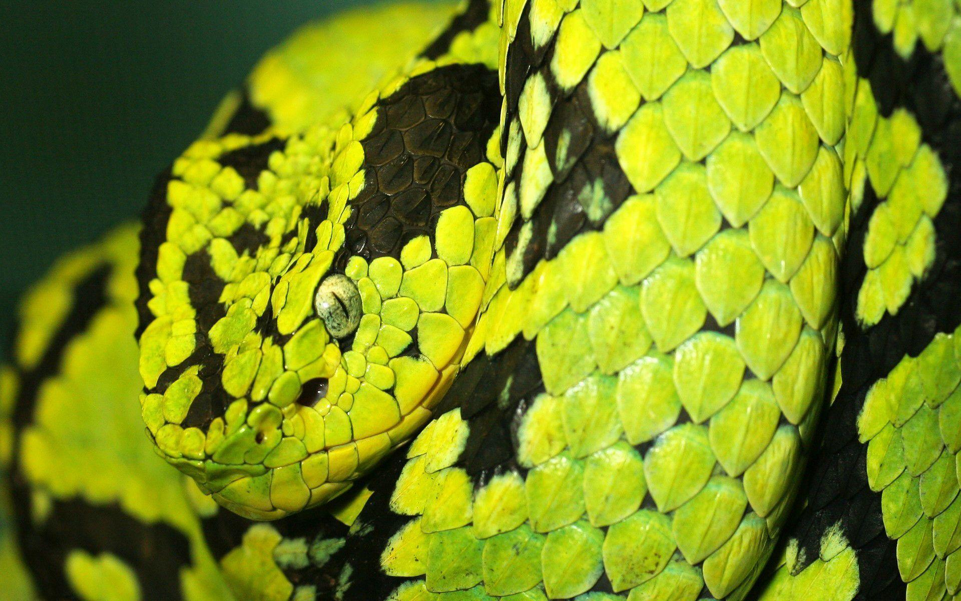 Deadly Snake Wallpapers | HD Wallpapers
