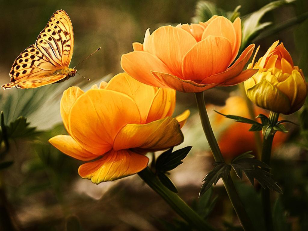 Colorful Butterfly HD Wallpapers | Real & Artistic
